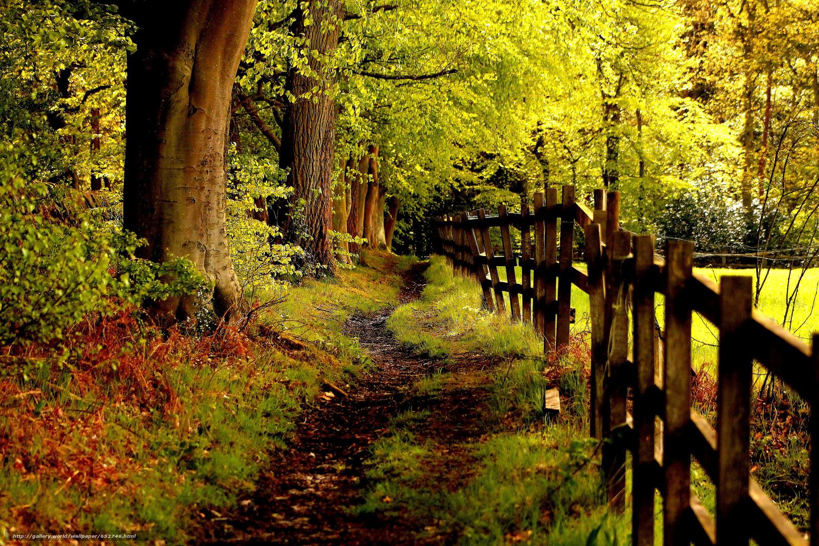 tlcharger fond d 39 ecran automne route arbres paysage fonds d 39 ecran gratuits pour votre. Black Bedroom Furniture Sets. Home Design Ideas