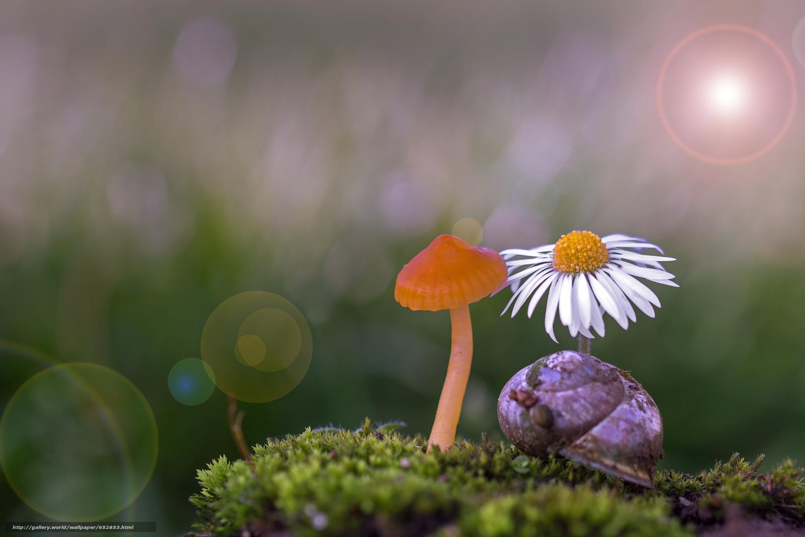Download wallpaper mushrooms,  mushroom,  Macro free desktop wallpaper in the resolution 5184x3456 — picture №652853