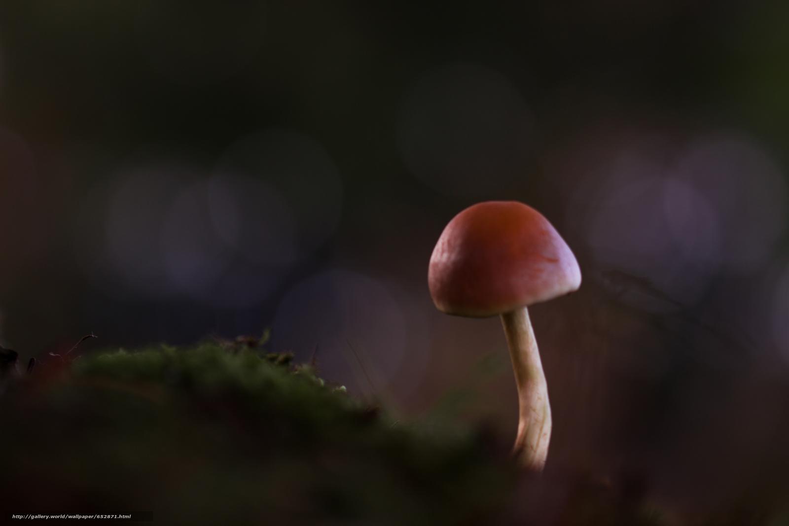 Скачать обои грибы,  гриб,  макро бесплатно для рабочего стола в разрешении 5184x3456 — картинка №652871