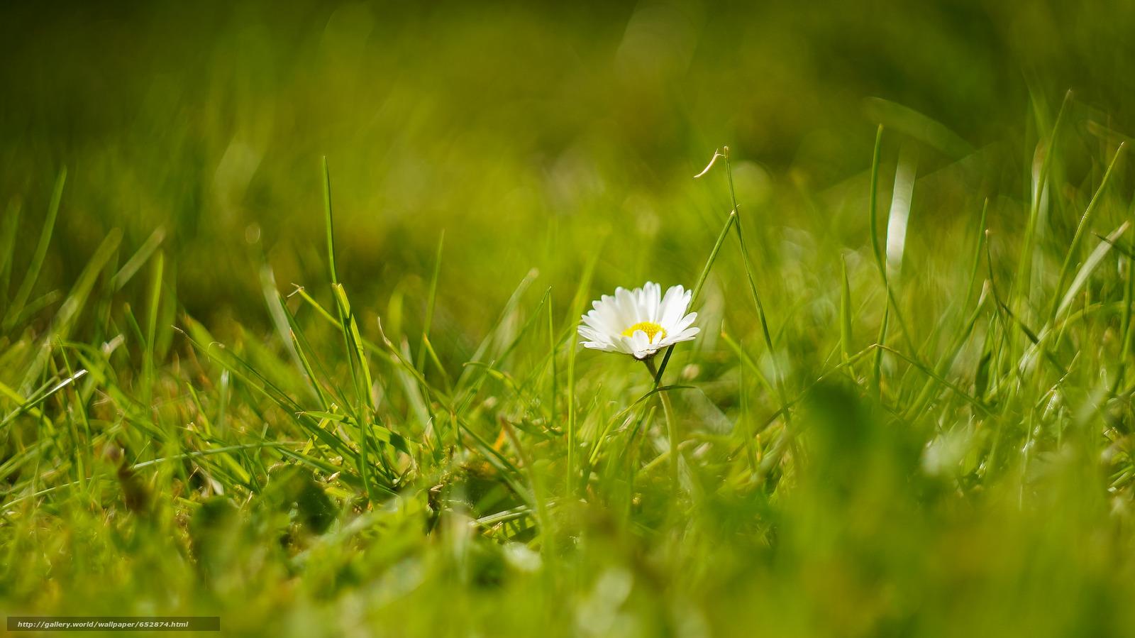 scaricare gli sfondi erba,  fiore,  Macro Sfondi gratis per la risoluzione del desktop 2048x1151 — immagine №652874