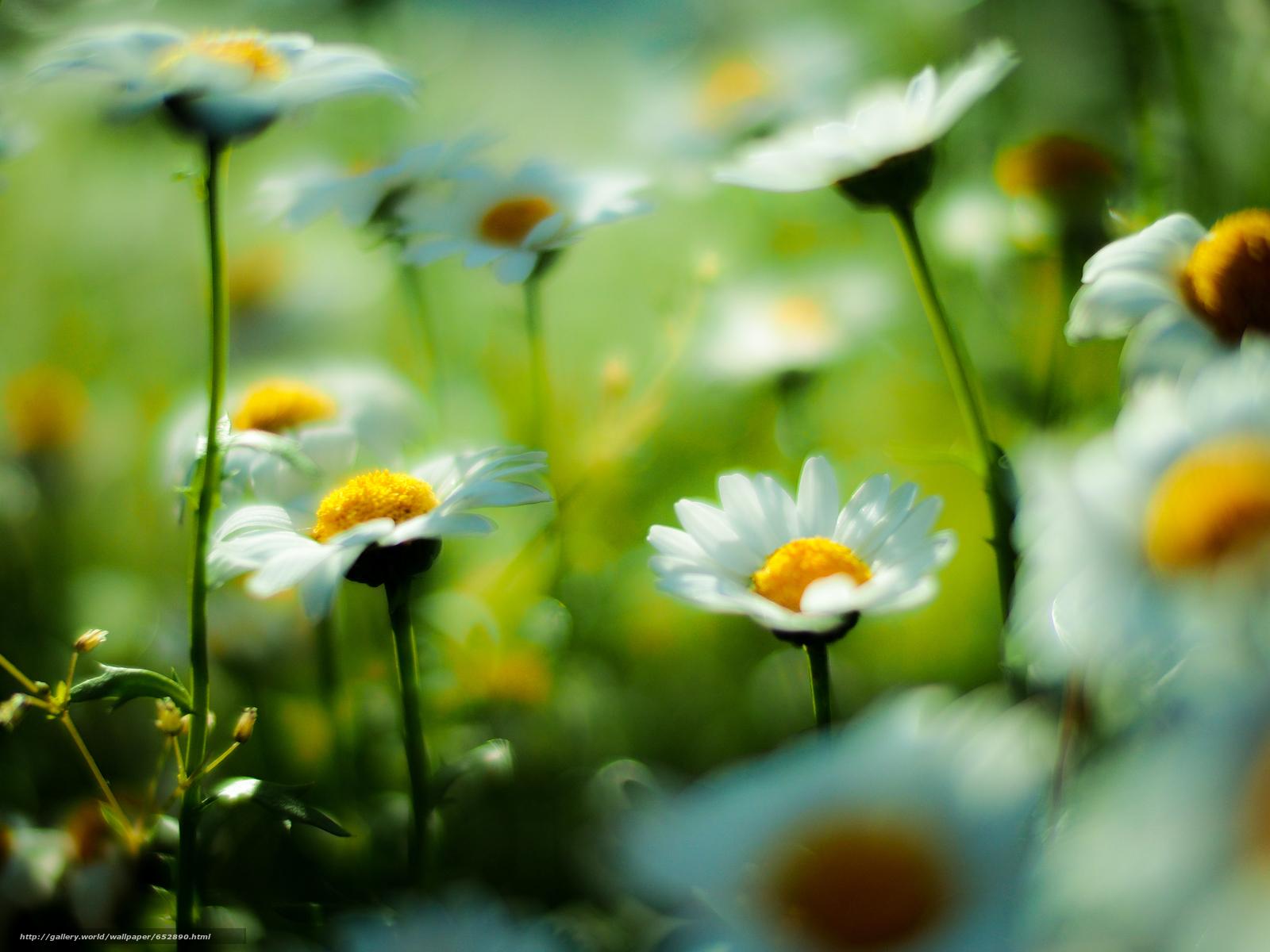 下载壁纸 场,  黄春菊,  花卉,  宏 免费为您的桌面分辨率的壁纸 3200x2400 — 图片 №652890