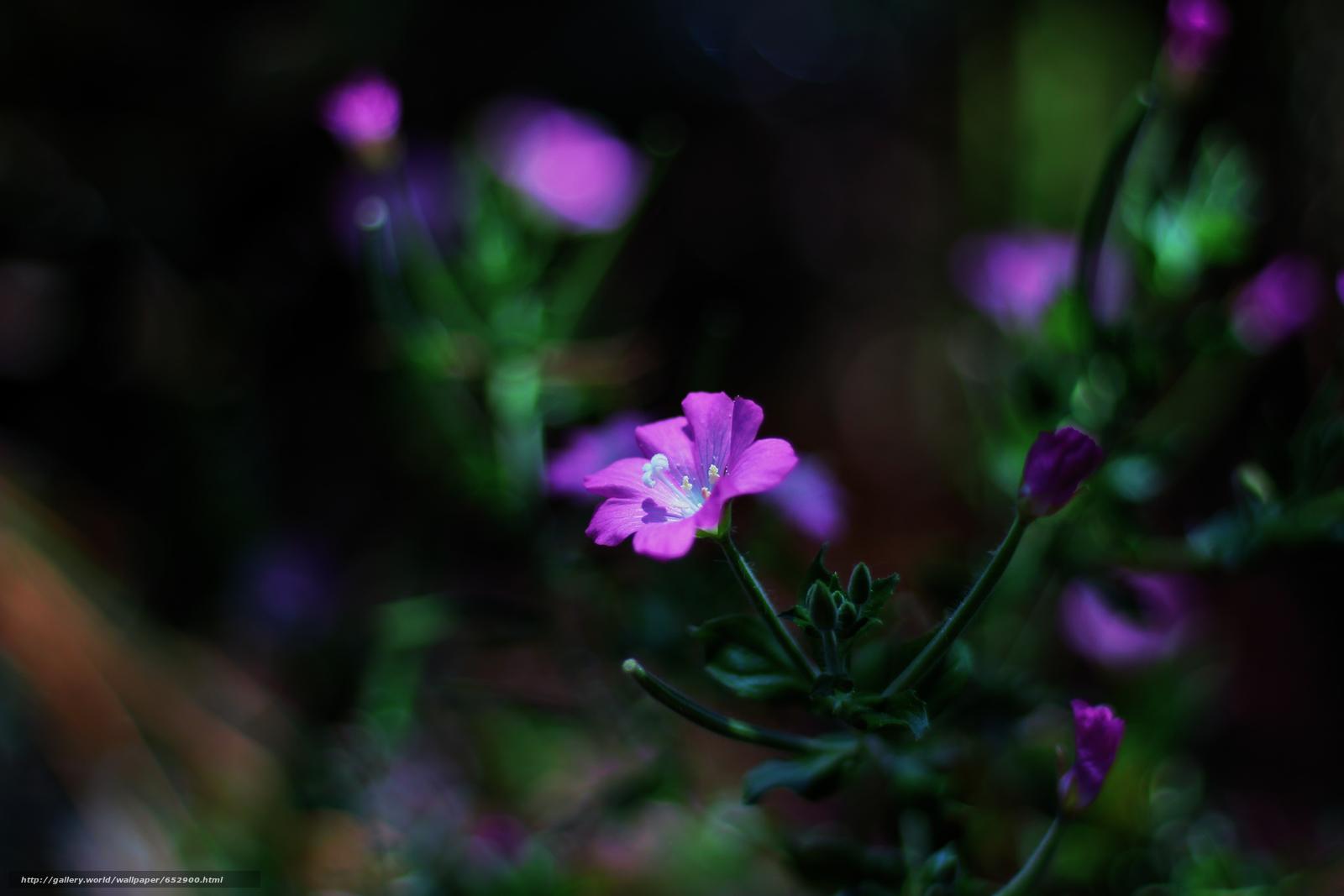Download wallpaper flower,  plant,  Macro free desktop wallpaper in the resolution 5184x3456 — picture №652900