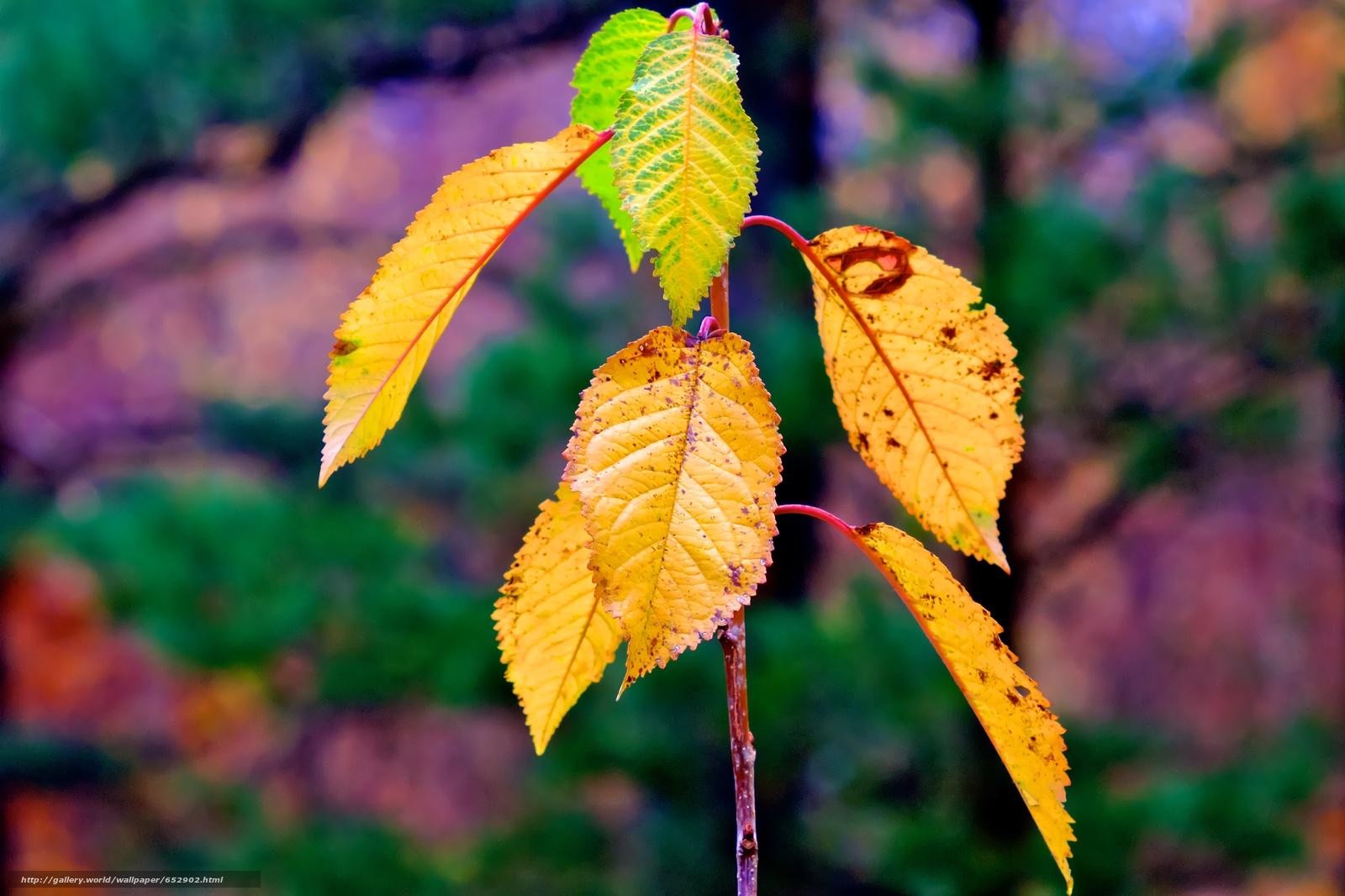 scaricare gli sfondi ramo,  fogliame,  autunno,  Macro Sfondi gratis per la risoluzione del desktop 4743x3161 — immagine №652902