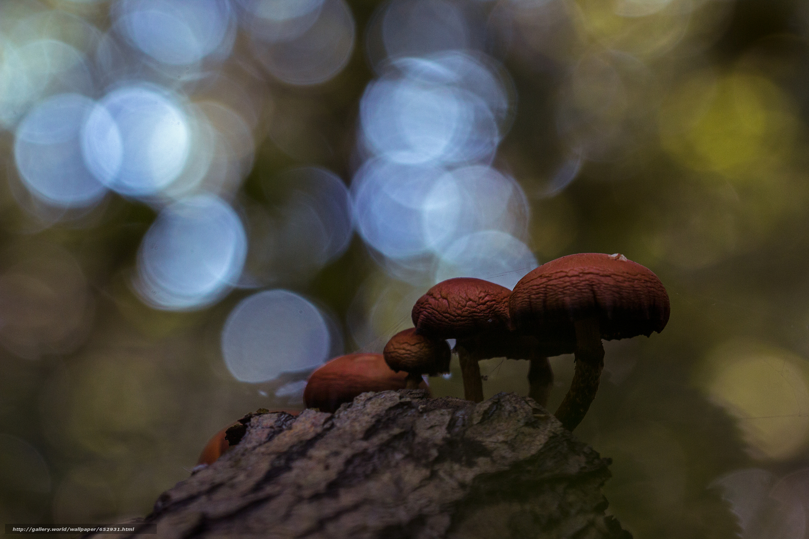 Download wallpaper mushrooms,  mushroom,  Macro free desktop wallpaper in the resolution 5184x3456 — picture №652931