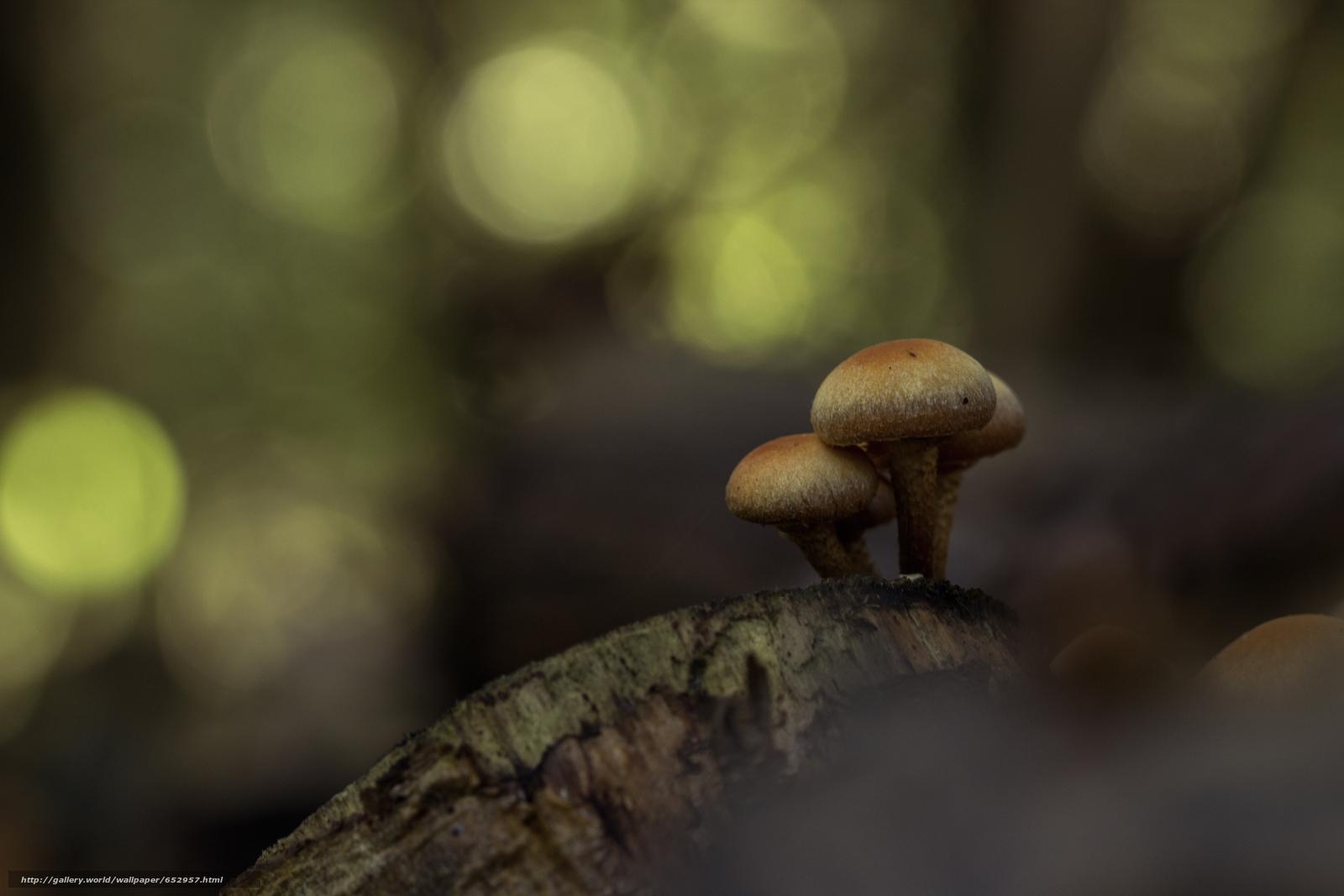 Скачать обои грибы,  гриб,  макро бесплатно для рабочего стола в разрешении 5184x3456 — картинка №652957