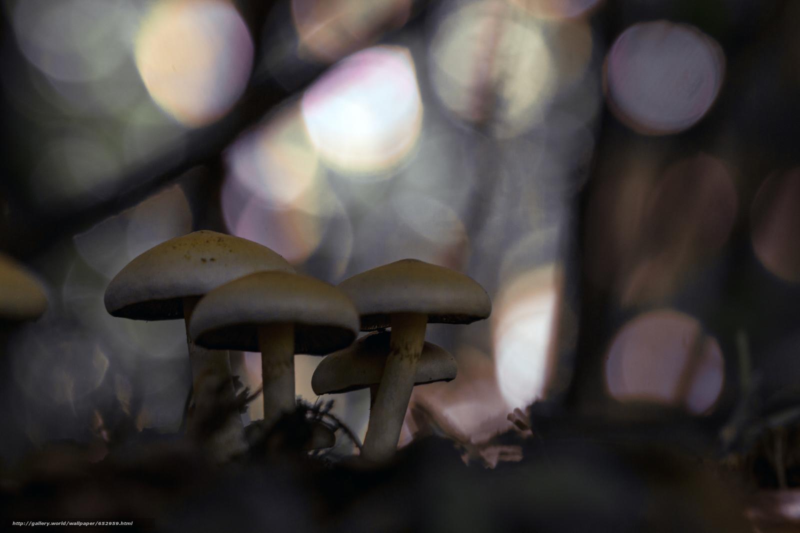 Скачать обои грибы,  гриб,  макро бесплатно для рабочего стола в разрешении 5184x3456 — картинка №652959