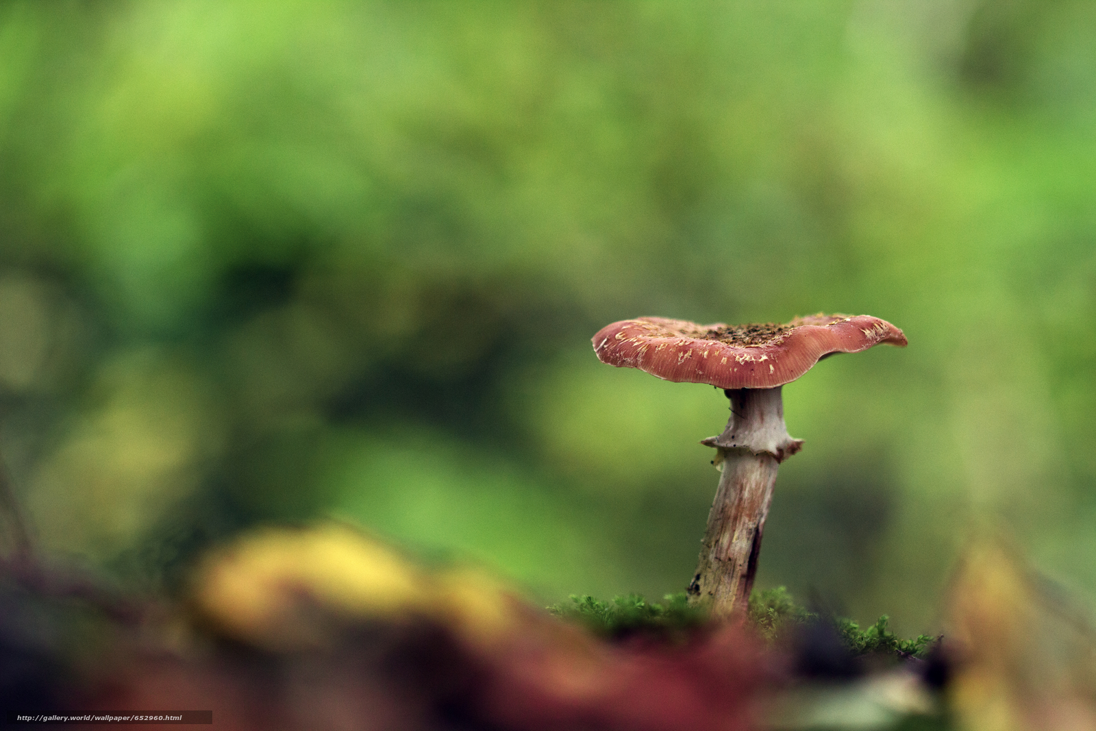 下载壁纸 蘑菇,  蘑菇,  宏 免费为您的桌面分辨率的壁纸 5184x3456 — 图片 №652960