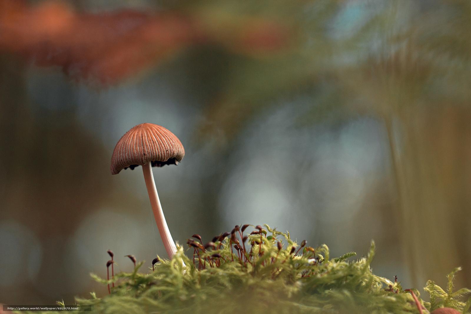 scaricare gli sfondi funghi,  funghi,  Macro Sfondi gratis per la risoluzione del desktop 5184x3456 — immagine №652975