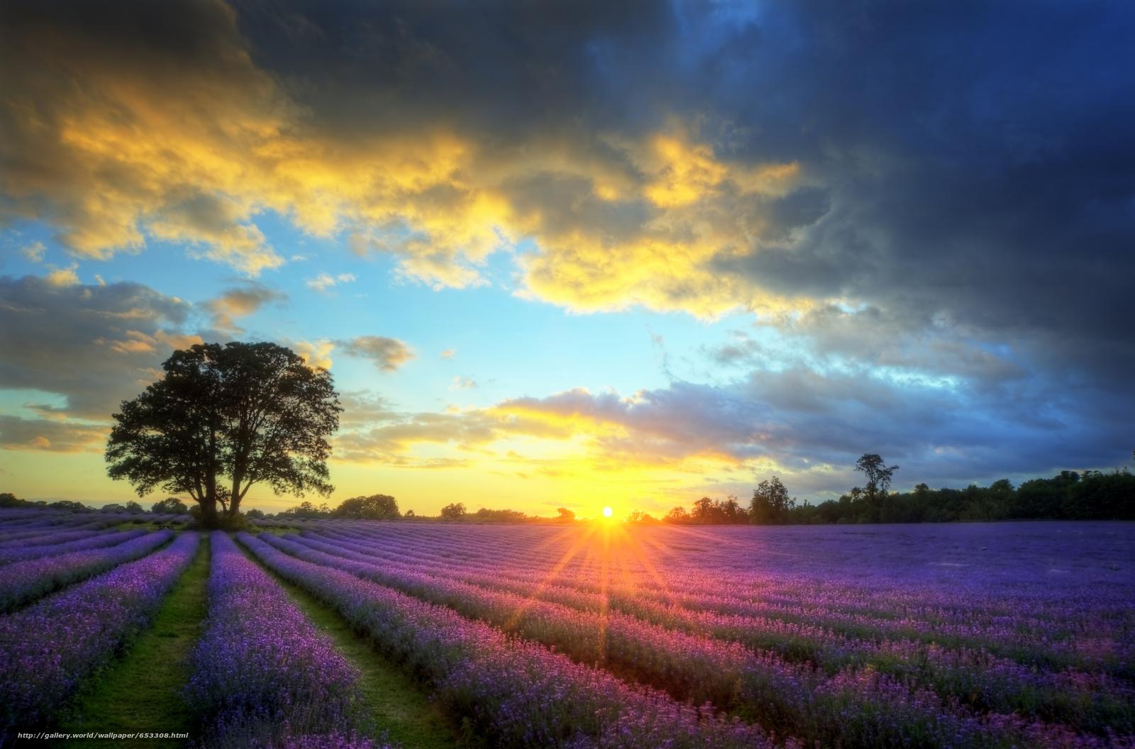 Скачать обои поле,  лаванда,  цветы,  лавандовое поле бесплатно для рабочего стола в разрешении 8356x5514 — картинка №653308