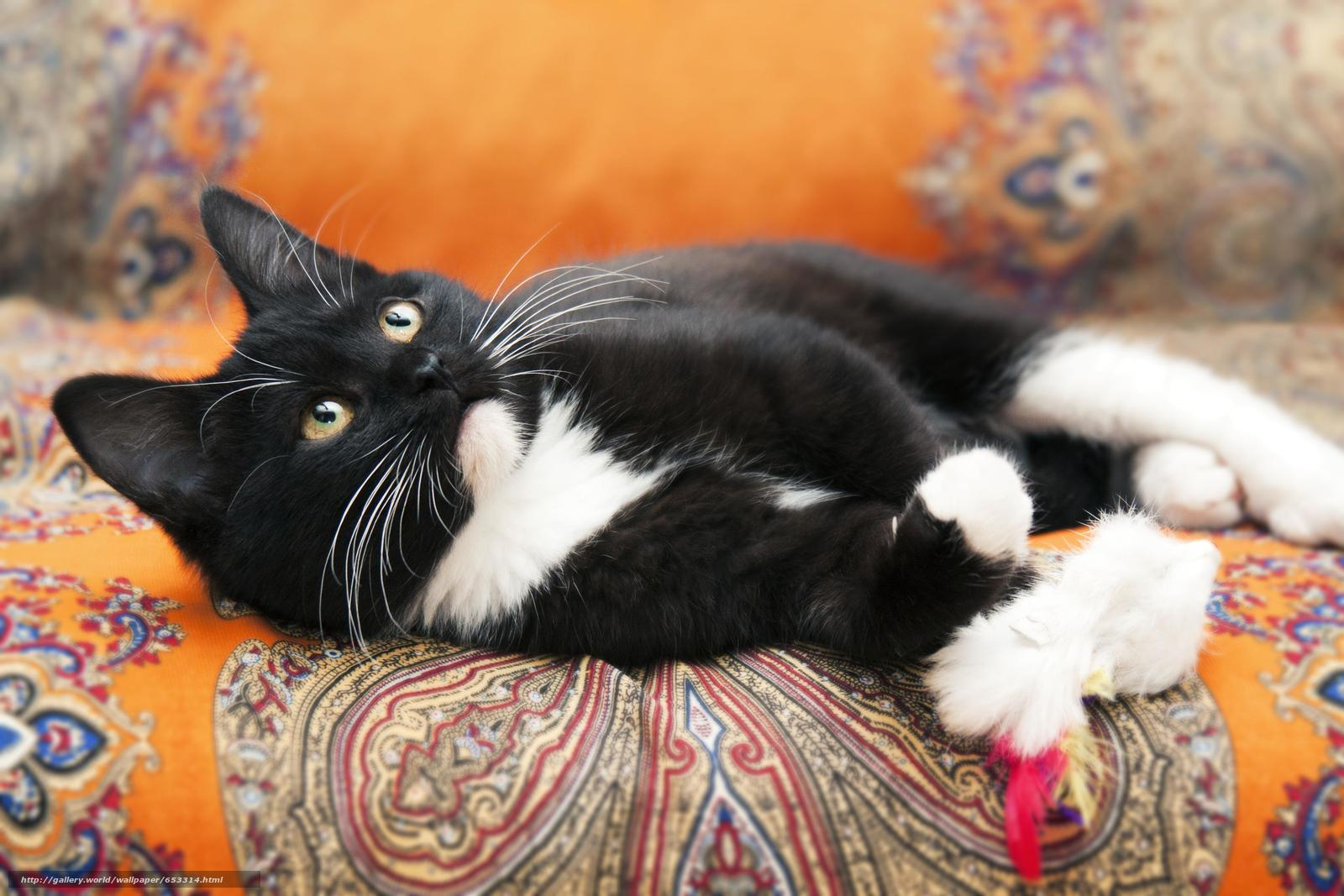 Download wallpaper COTE,  kitten,  black-white,  cat free desktop wallpaper in the resolution 4122x2748 — picture №653314