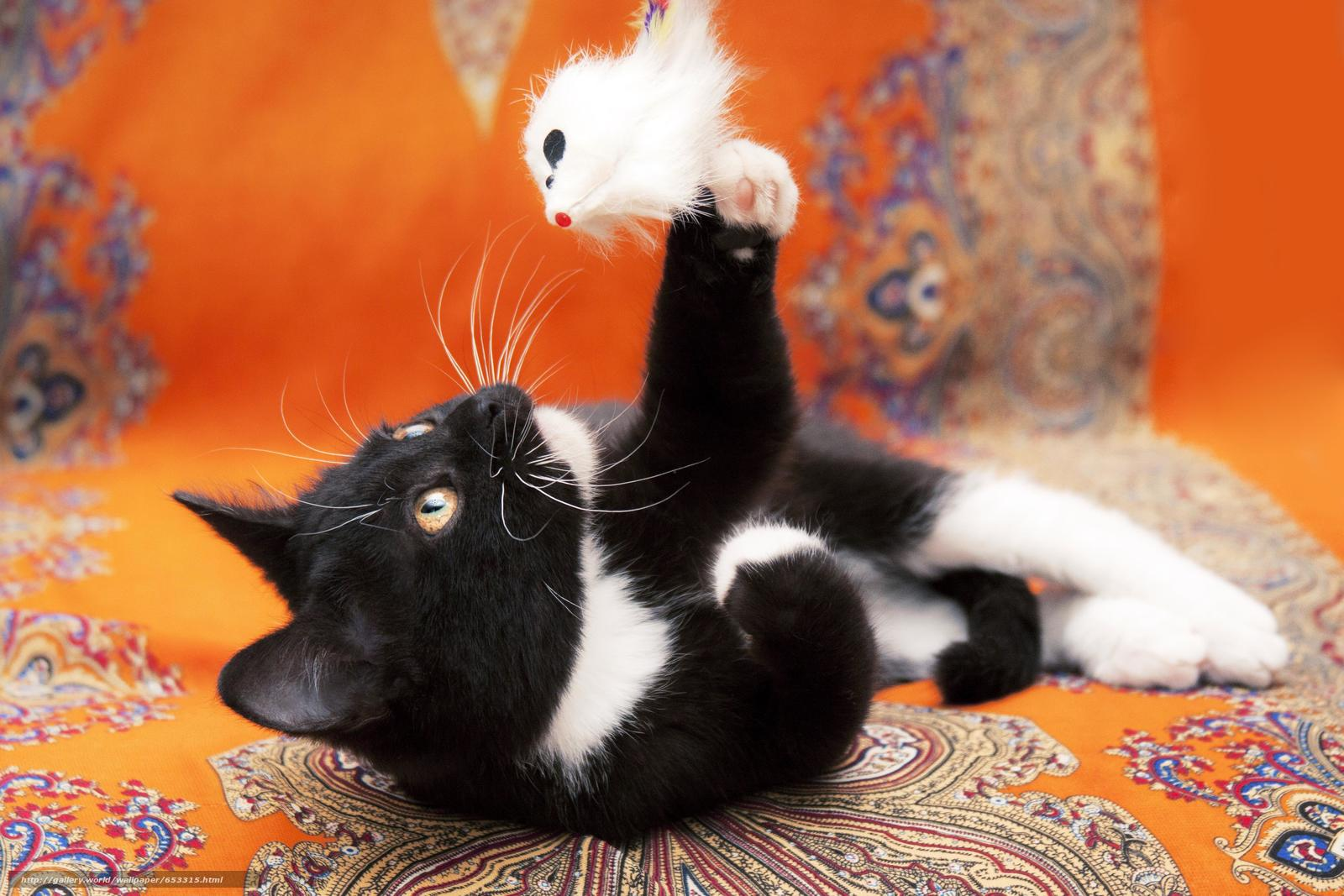 scaricare gli sfondi COTE,  gattino,  nero-bianco,  gatto Sfondi gratis per la risoluzione del desktop 3771x2514 — immagine №653315