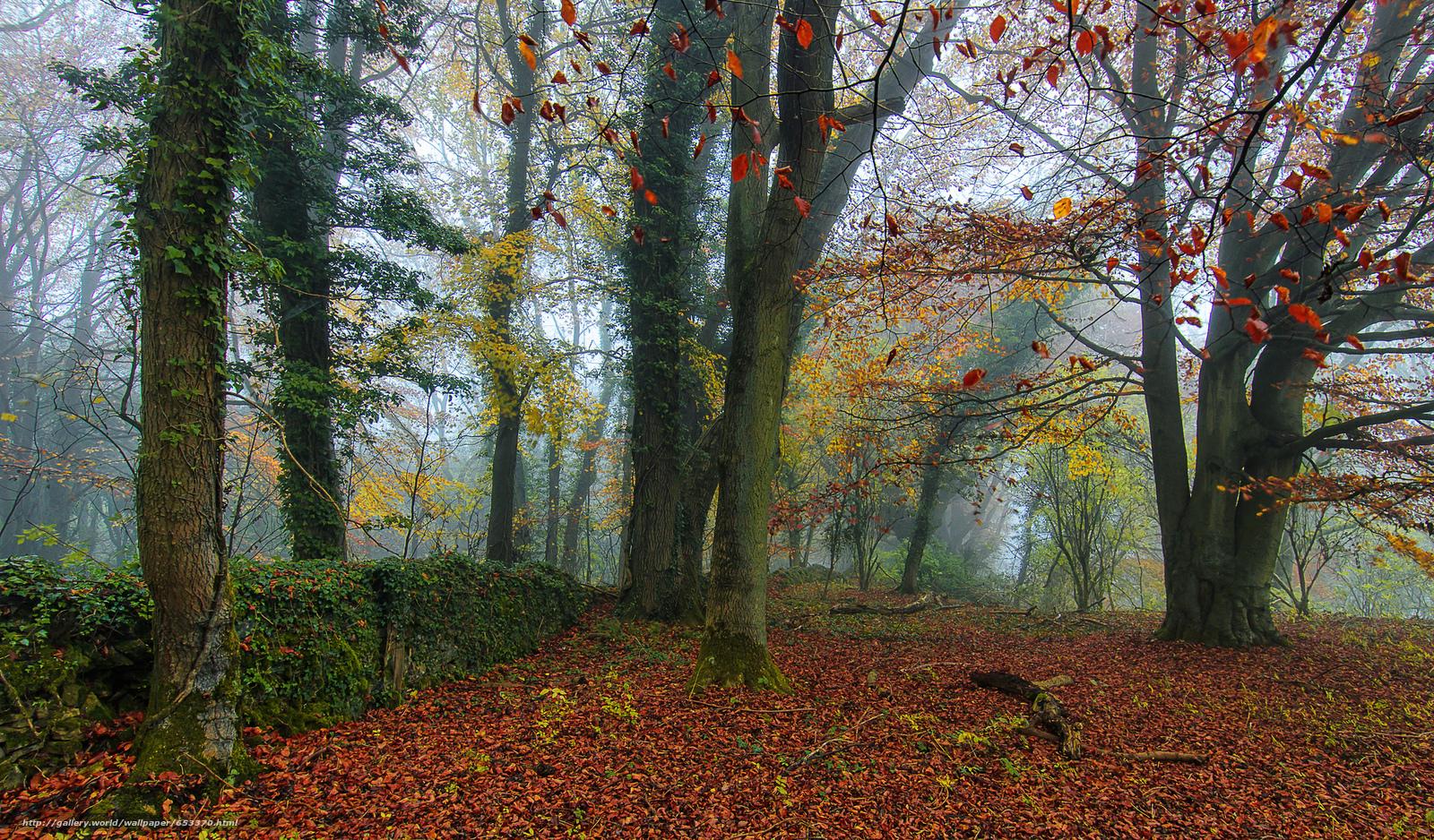 Скачать обои осень,  лес,  туман,  деревья бесплатно для рабочего стола в разрешении 2048x1201 — картинка №653370