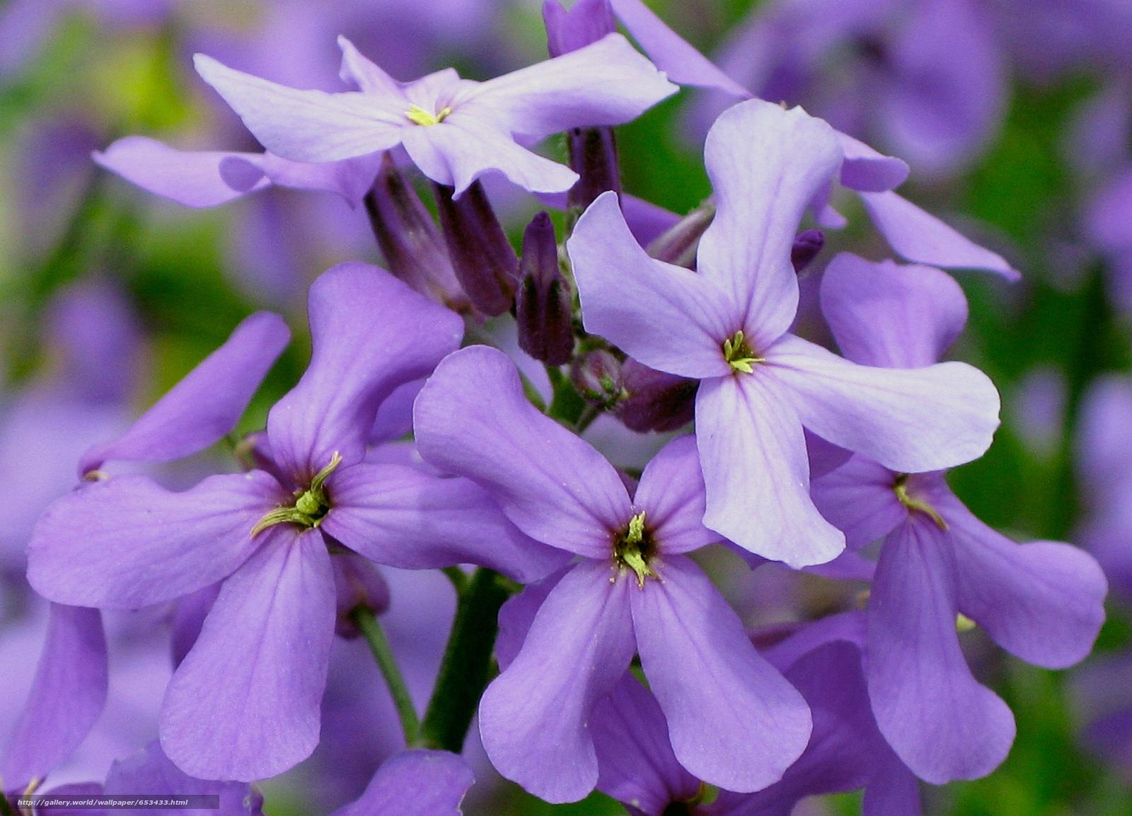 Descargar gratis Flores,  flor,  Macro,  hermosa flor Fondos de escritorio en la resolucin 2048x1476 — imagen №653433
