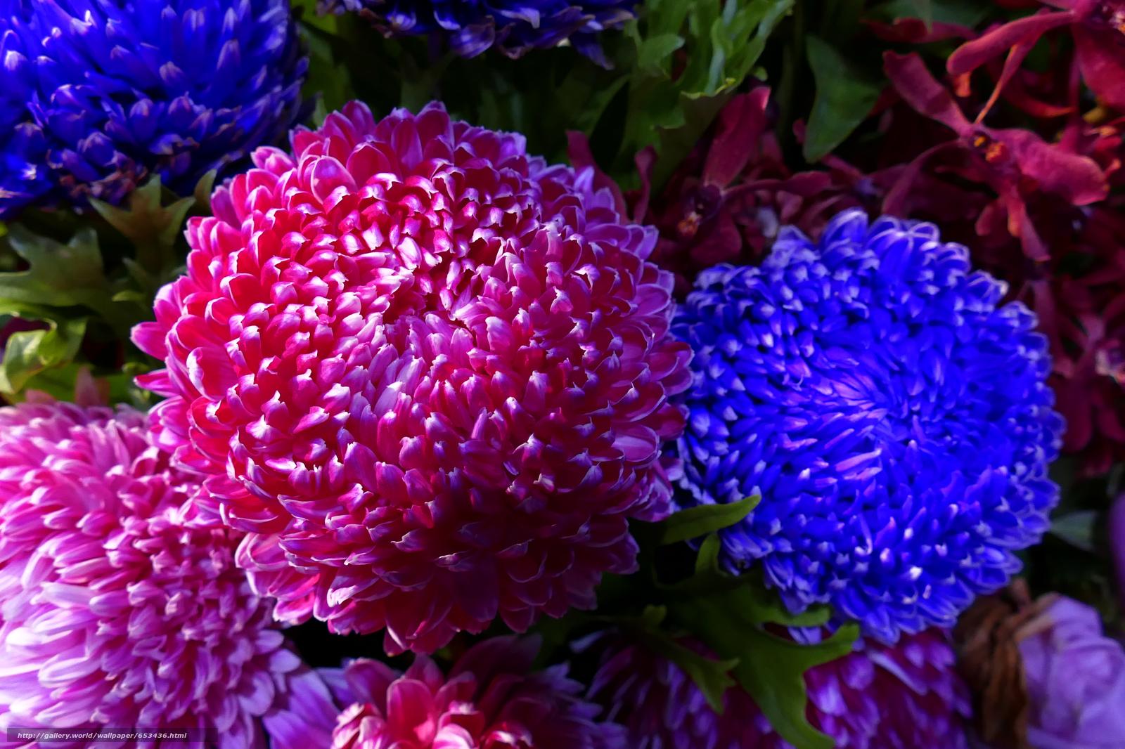 Descargar gratis Flores,  flor,  Macro,  hermosa flor Fondos de escritorio en la resolucin 5212x3474 — imagen №653436