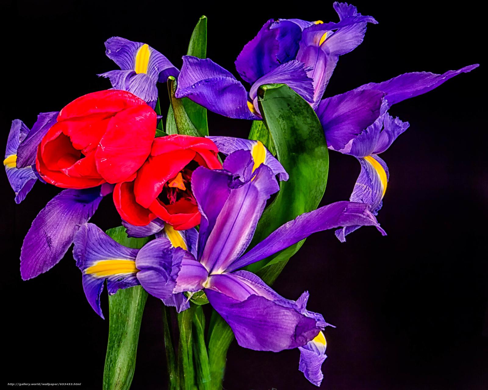 Скачать обои цветы,  цветок,  макро,  красивый цветок бесплатно для рабочего стола в разрешении 4073x3258 — картинка №653453