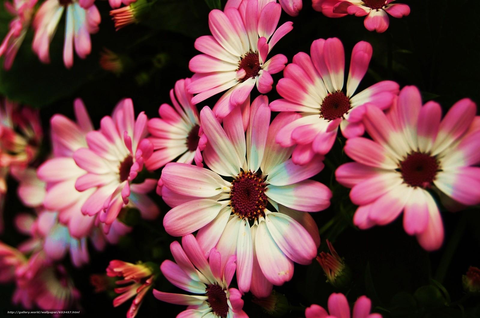 Поиск картинок на тему красивые картинки 58