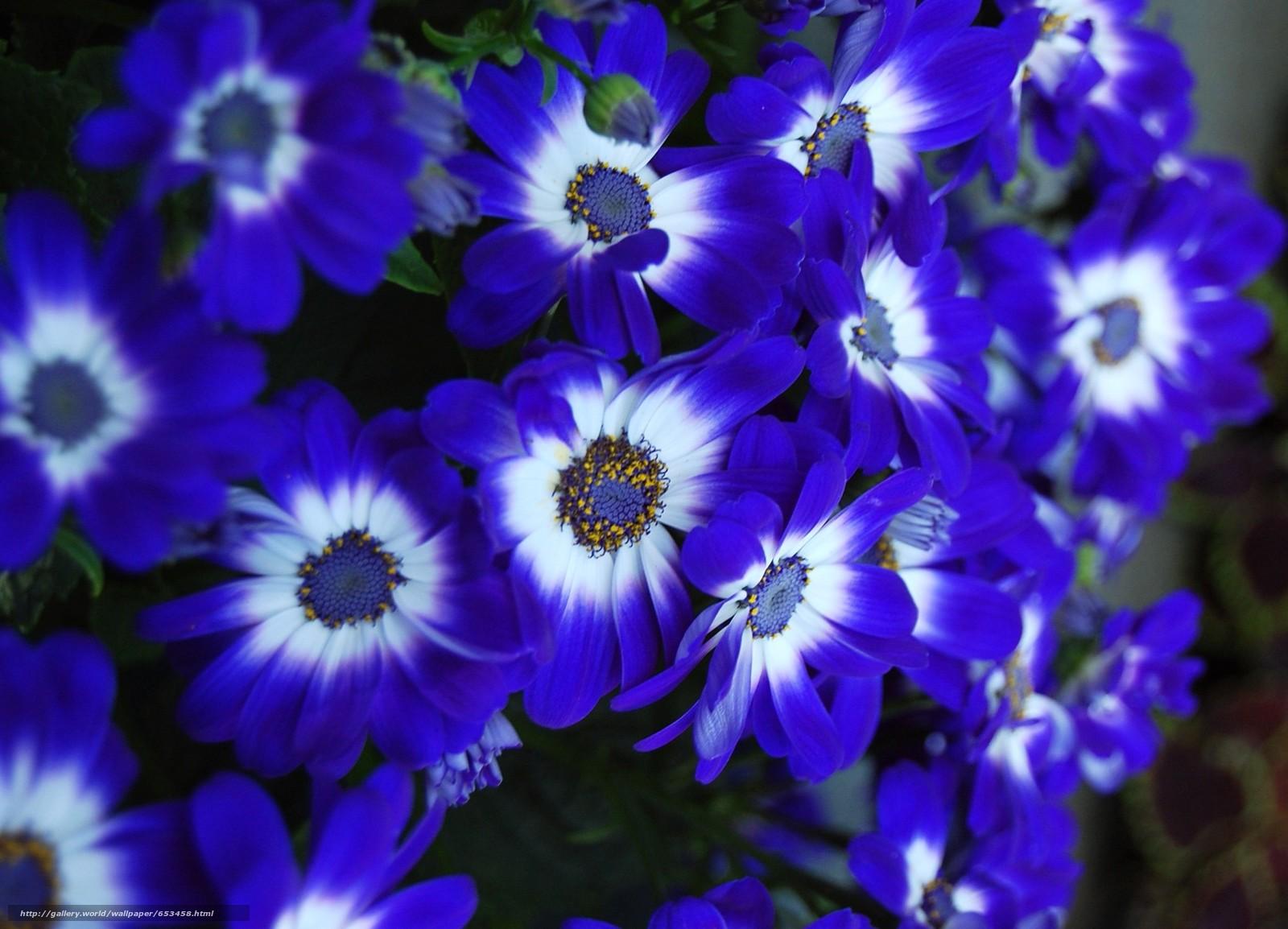 Скачать обои цветы,  цветок,  макро,  красивый цветок бесплатно для рабочего стола в разрешении 2075x1496 — картинка №653458