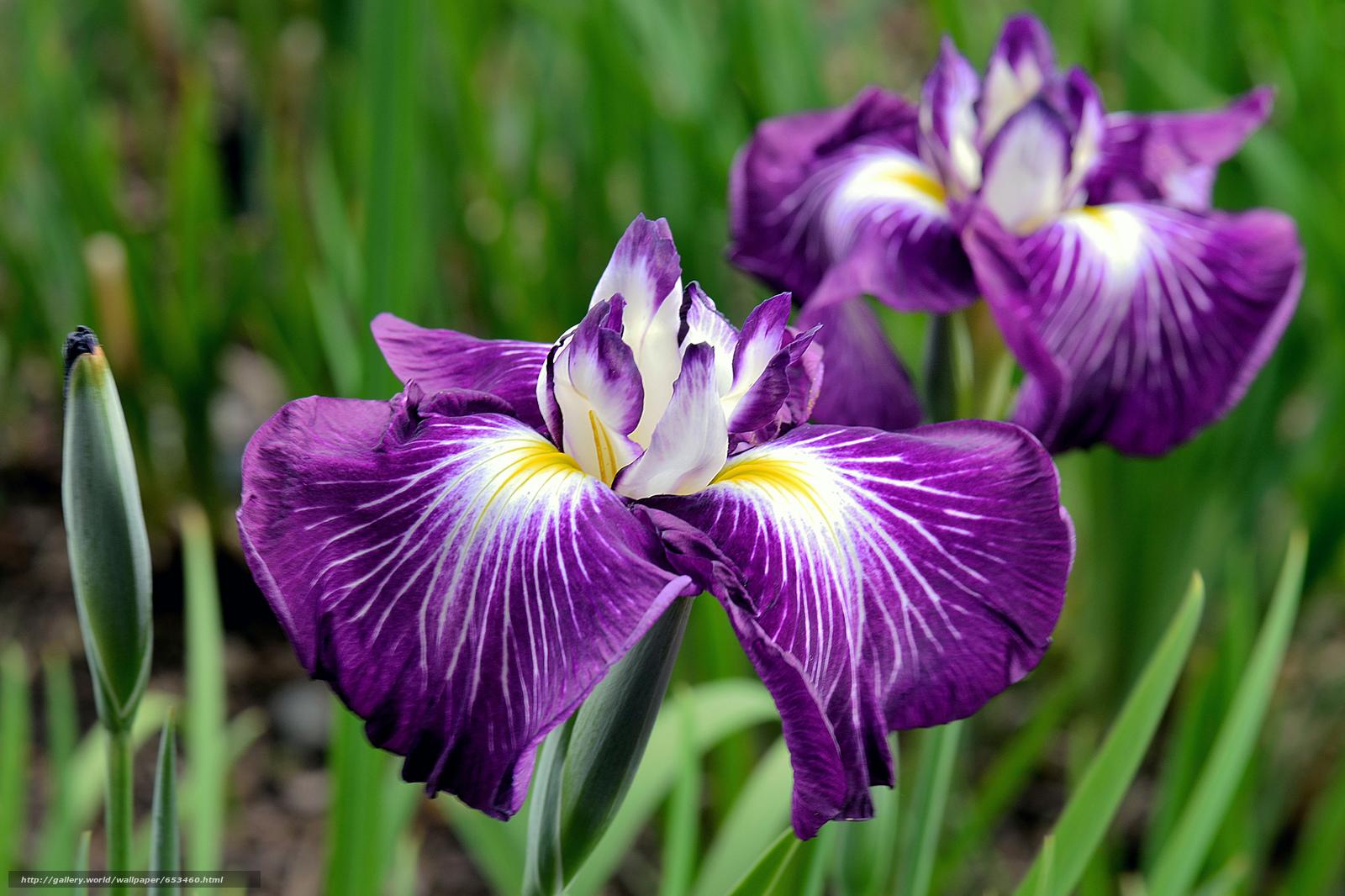 Скачать обои цветы,  цветок,  макро,  красивый цветок бесплатно для рабочего стола в разрешении 2048x1365 — картинка №653460