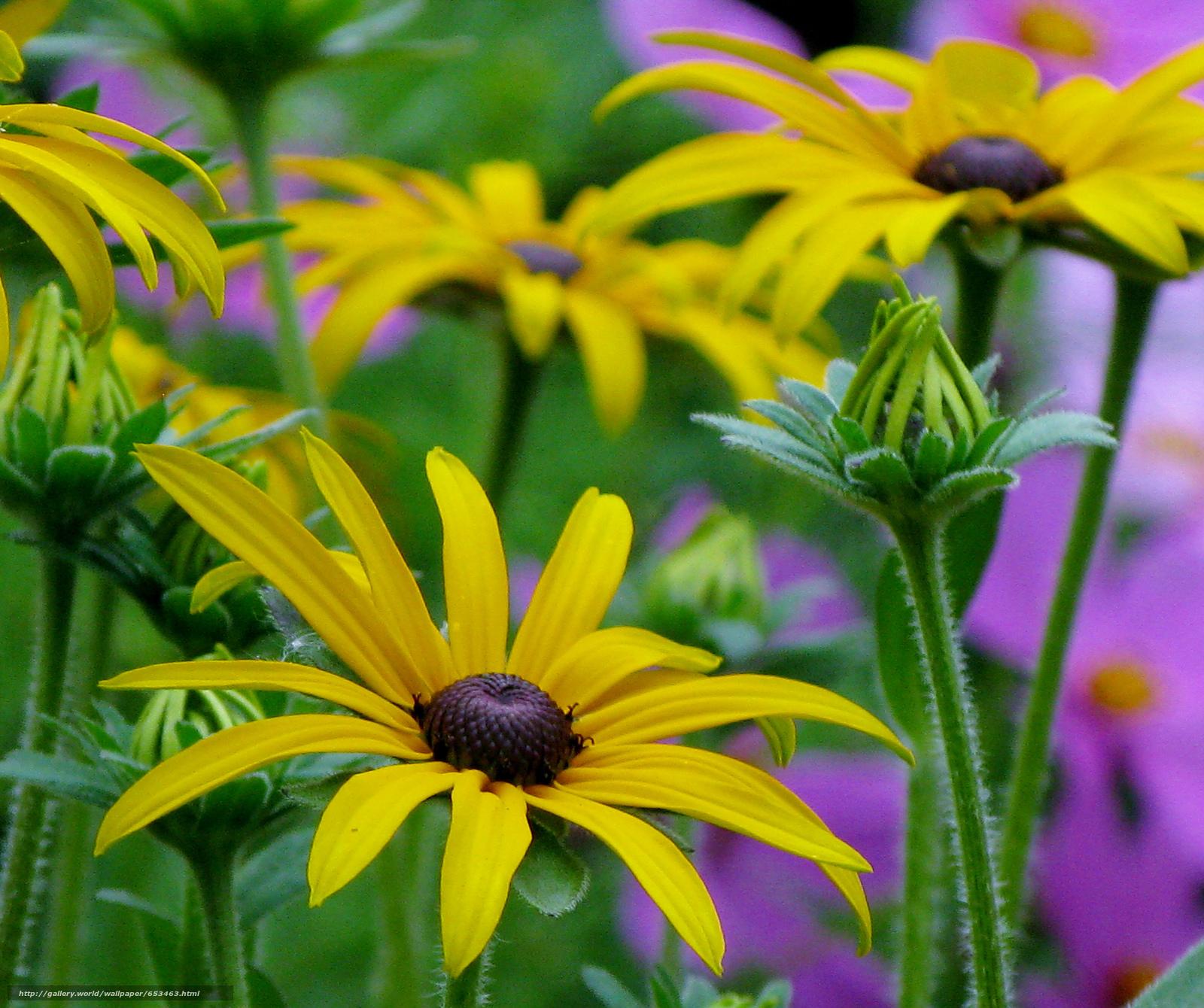 Скачать обои цветы,  цветок,  макро,  красивый цветок бесплатно для рабочего стола в разрешении 2048x1715 — картинка №653463