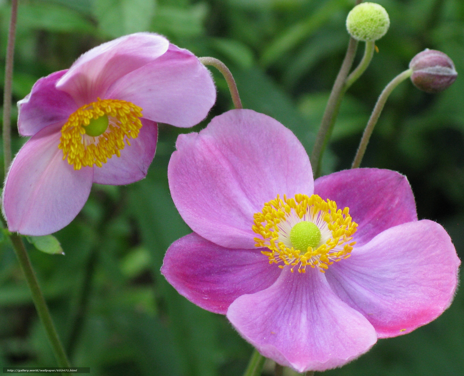 Descargar gratis Flores,  flor,  Macro,  hermosa flor Fondos de escritorio en la resolucin 2048x1660 — imagen №653471