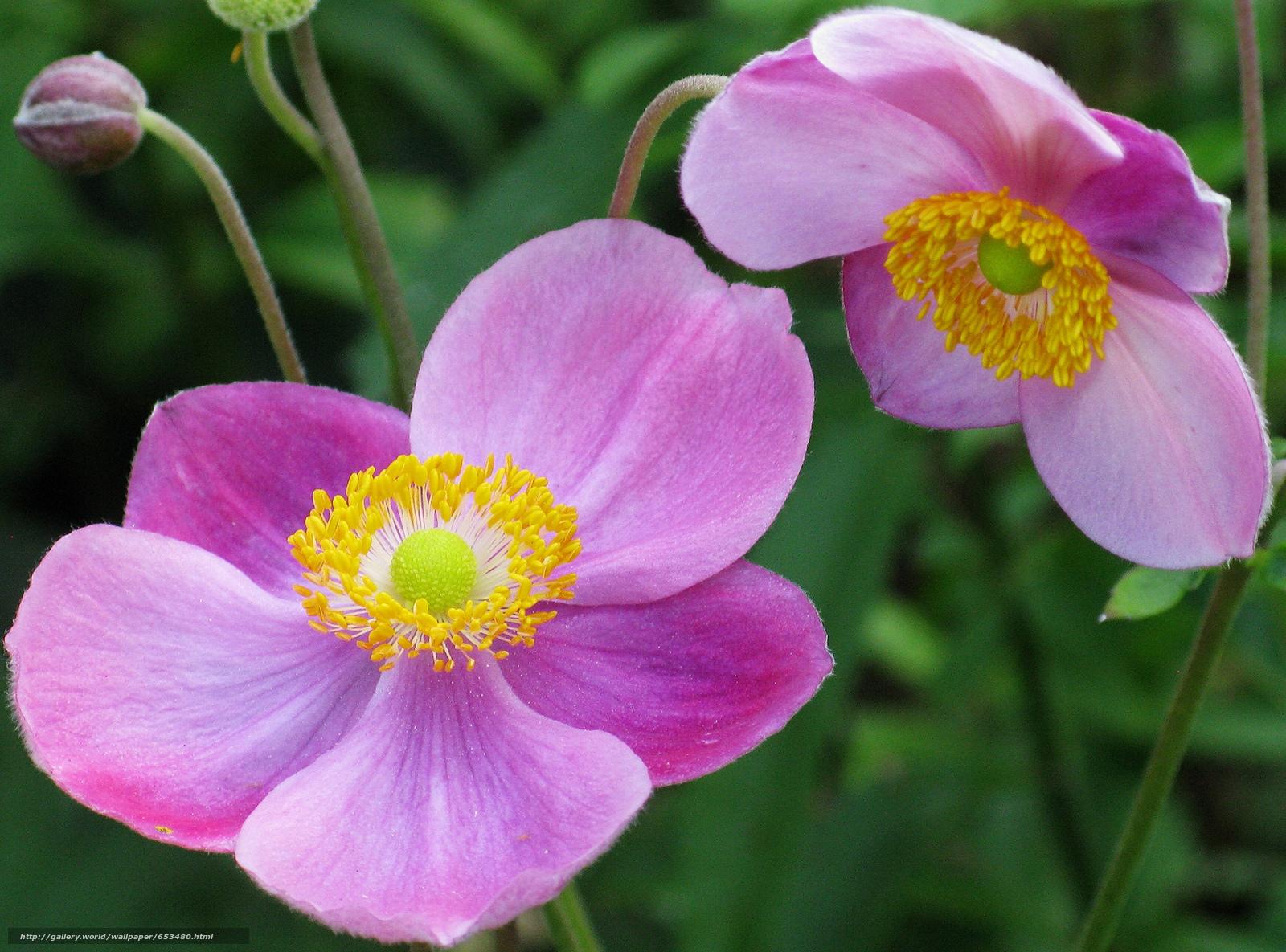 Descargar gratis Flores,  flor,  Macro,  hermosa flor Fondos de escritorio en la resolucin 2048x1517 — imagen №653480