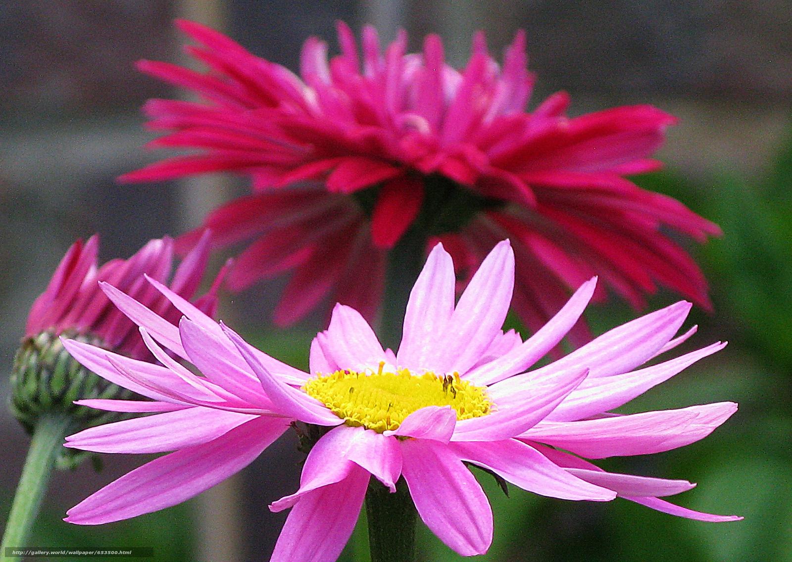 Скачать обои цветы,  цветок,  макро,  красивый цветок бесплатно для рабочего стола в разрешении 2048x1454 — картинка №653500