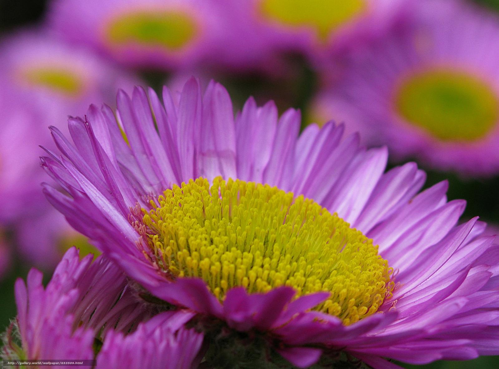 Descargar gratis Flores,  flor,  Macro,  hermosa flor Fondos de escritorio en la resolucin 2048x1515 — imagen №653509