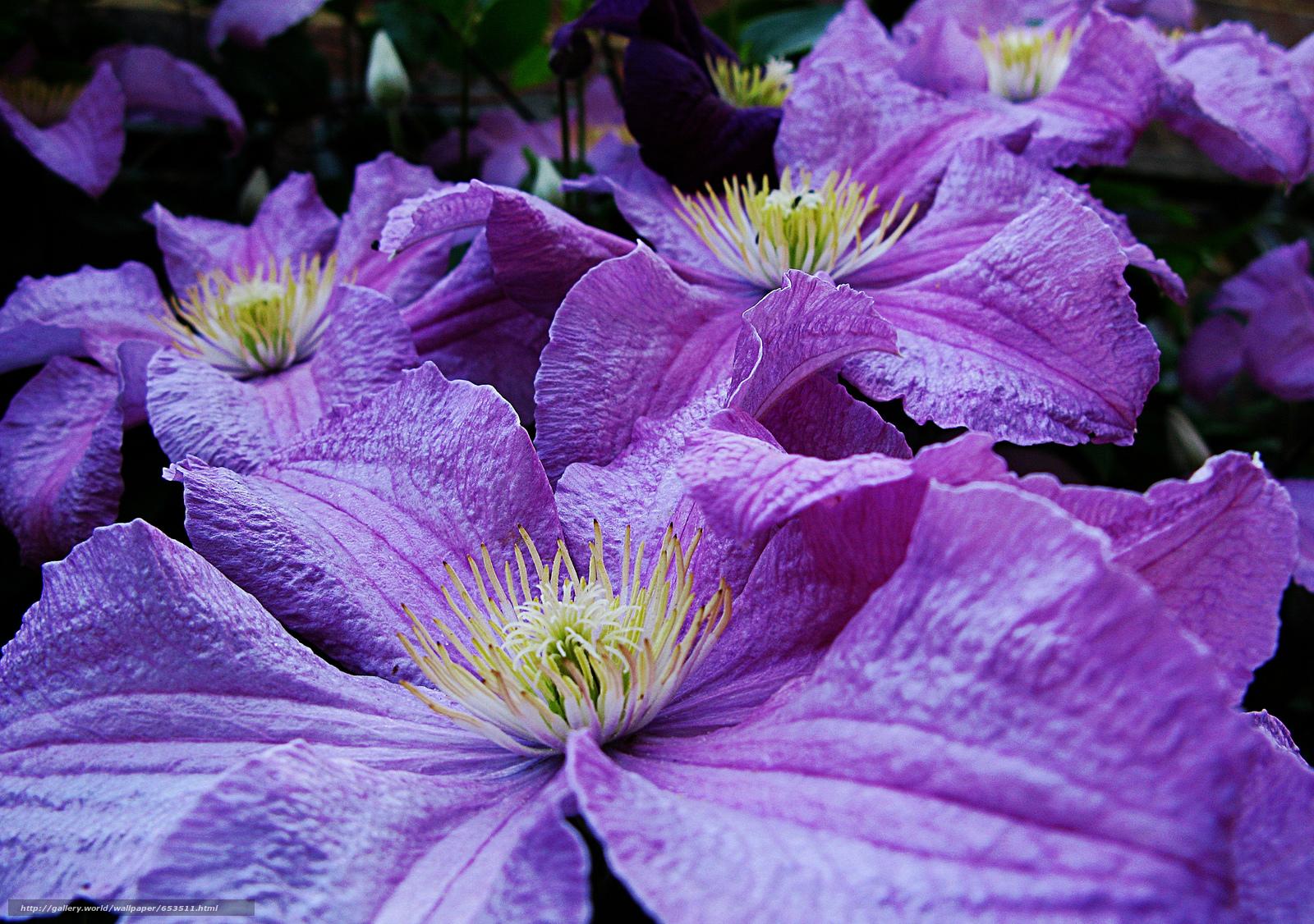 Descargar gratis Flores,  flor,  Macro,  hermosa flor Fondos de escritorio en la resolucin 2048x1441 — imagen №653511