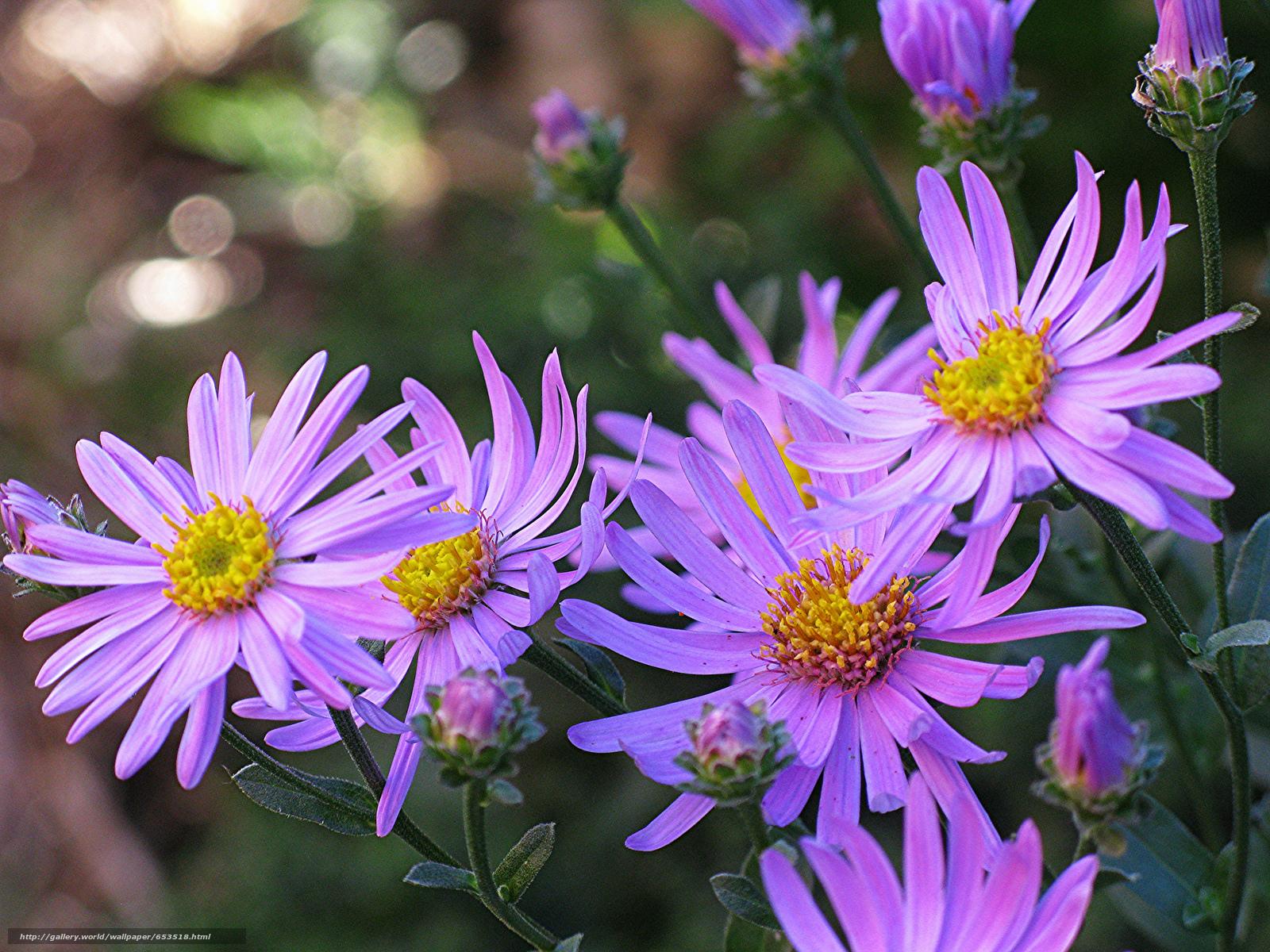 Descargar gratis Flores,  flor,  Macro,  hermosa flor Fondos de escritorio en la resolucin 2048x1536 — imagen №653518