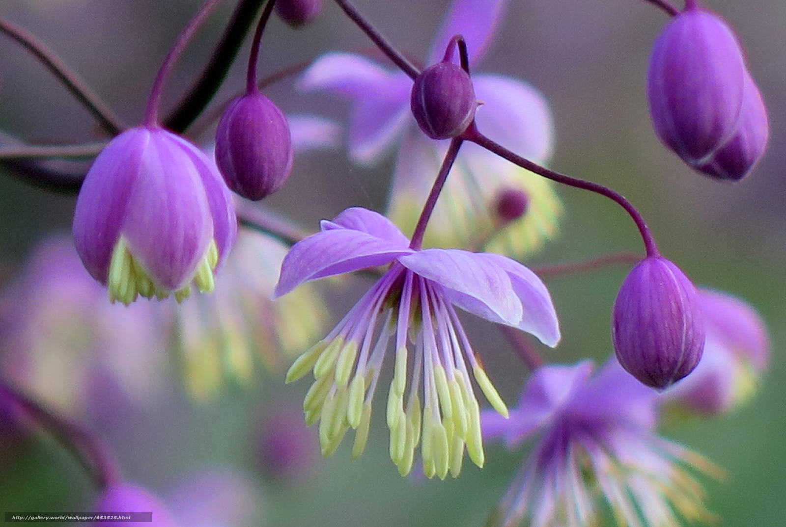 Descargar gratis Flores,  flor,  Macro,  hermosa flor Fondos de escritorio en la resolucin 2048x1375 — imagen №653525