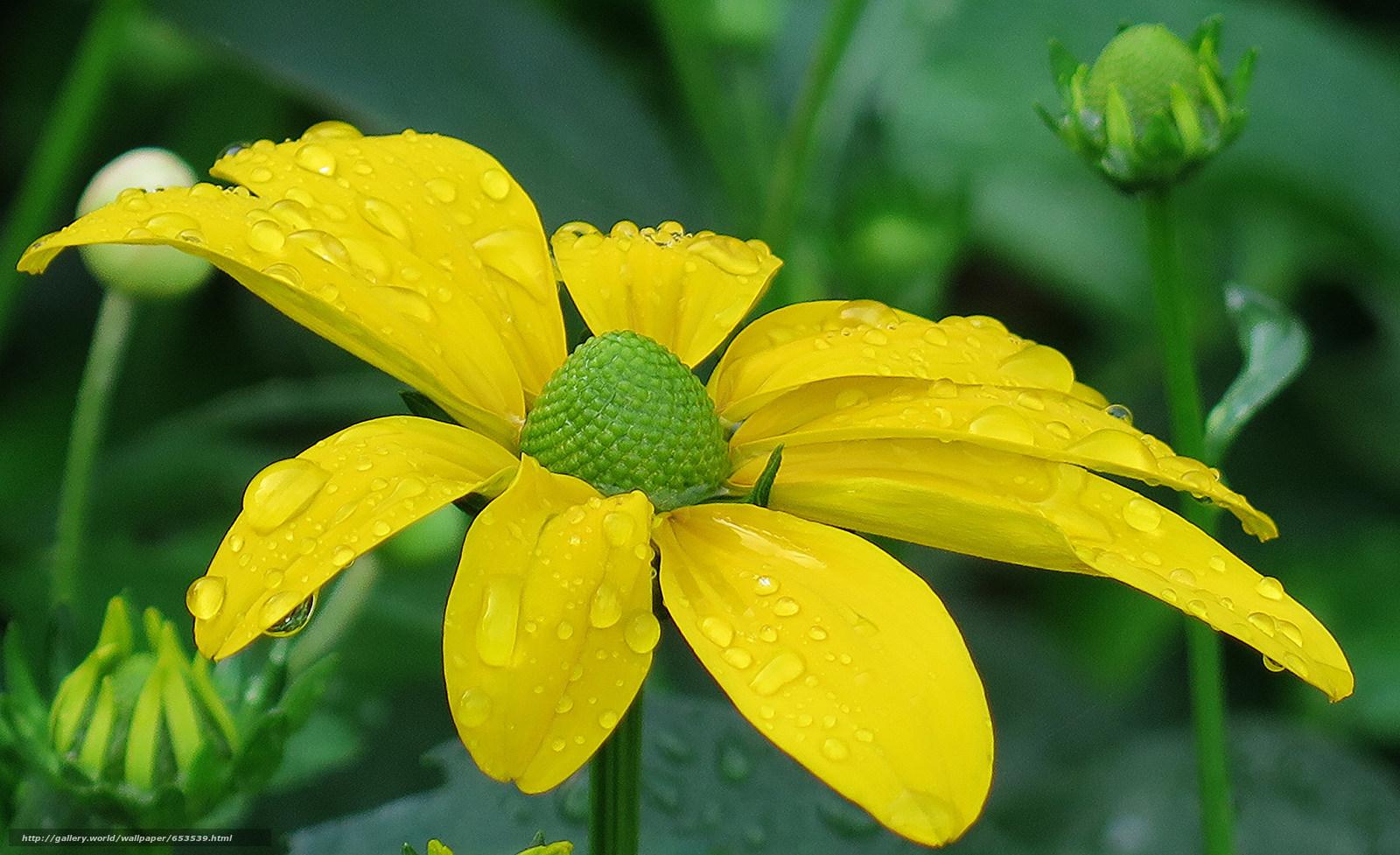 Скачать обои цветы,  цветок,  макро,  красивый цветок бесплатно для рабочего стола в разрешении 2048x1251 — картинка №653539