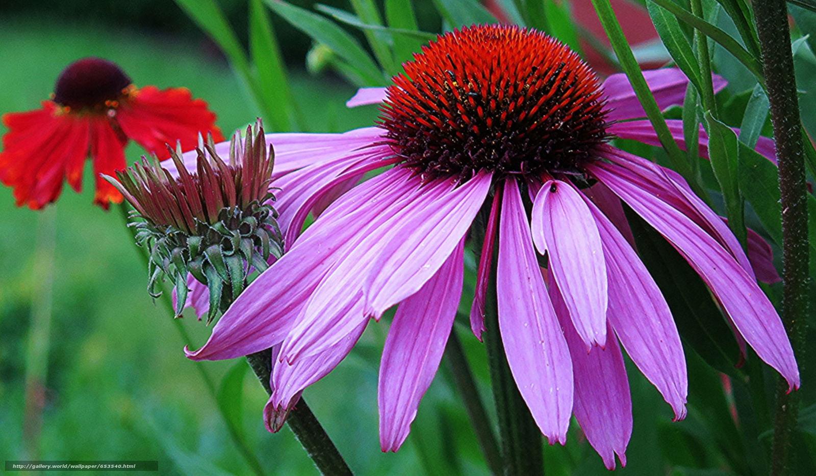 Descargar gratis Flores,  flor,  Macro,  hermosa flor Fondos de escritorio en la resolucin 2048x1197 — imagen №653540