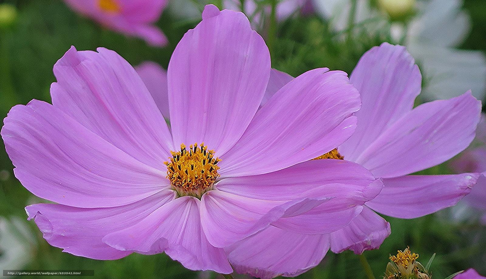 Descargar gratis Flores,  flor,  Macro,  hermosa flor Fondos de escritorio en la resolucin 2048x1178 — imagen №653542
