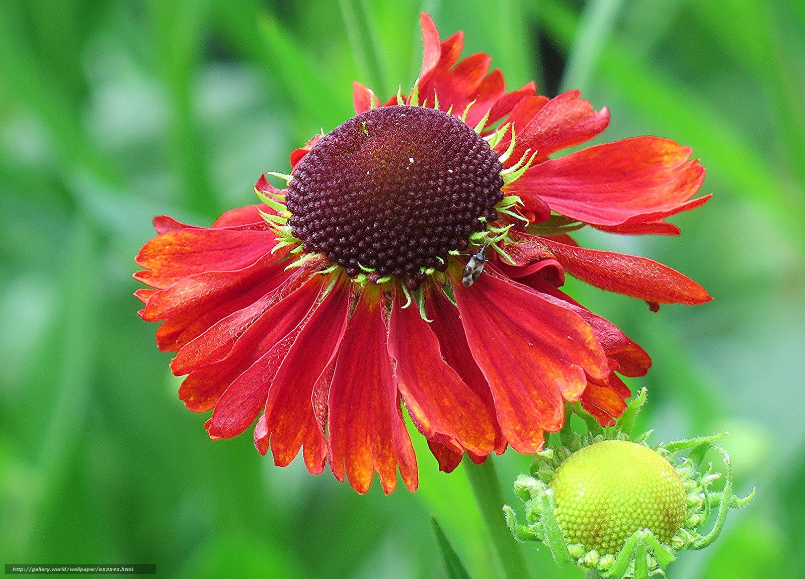 Descargar gratis Flores,  flor,  Macro,  hermosa flor Fondos de escritorio en la resolucin 2048x1474 — imagen №653543