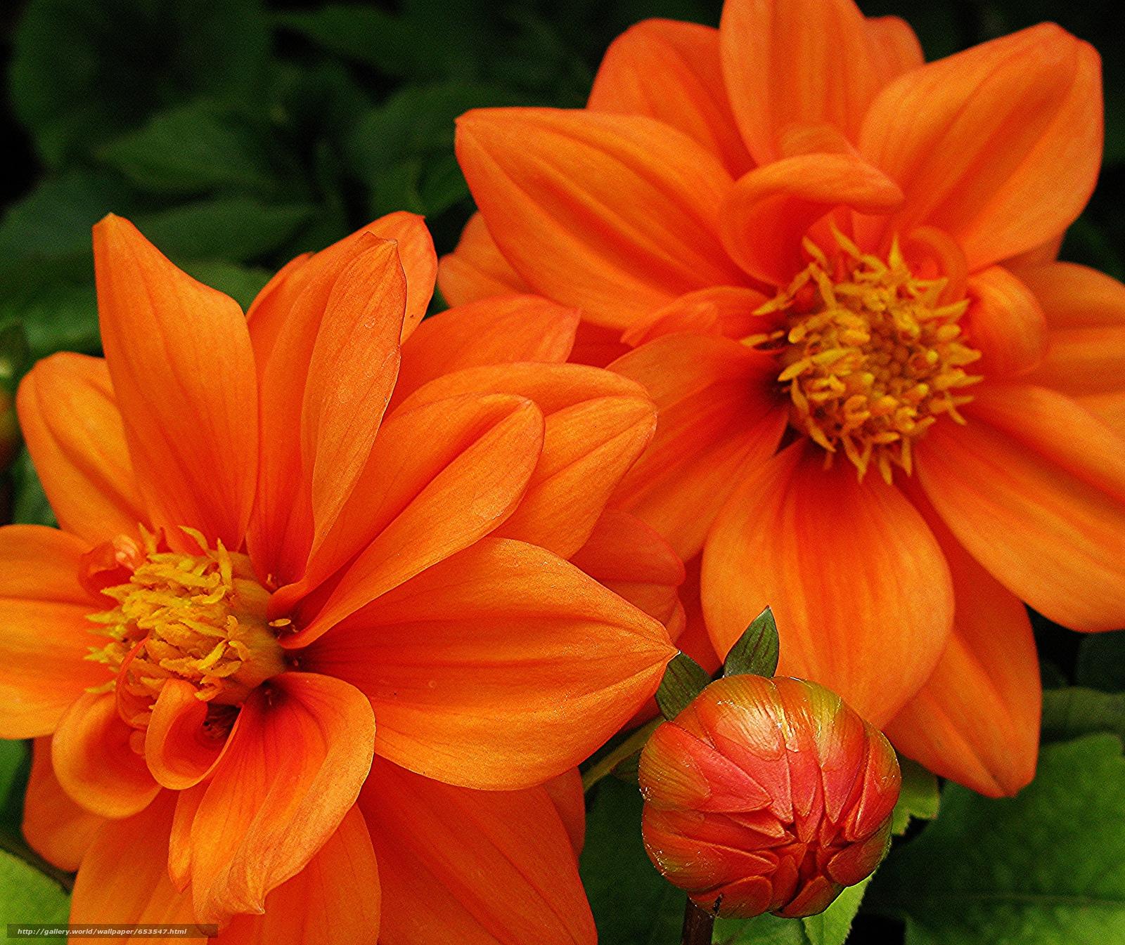 Descargar gratis Flores,  flor,  Macro,  hermosa flor Fondos de escritorio en la resolucin 2048x1721 — imagen №653547