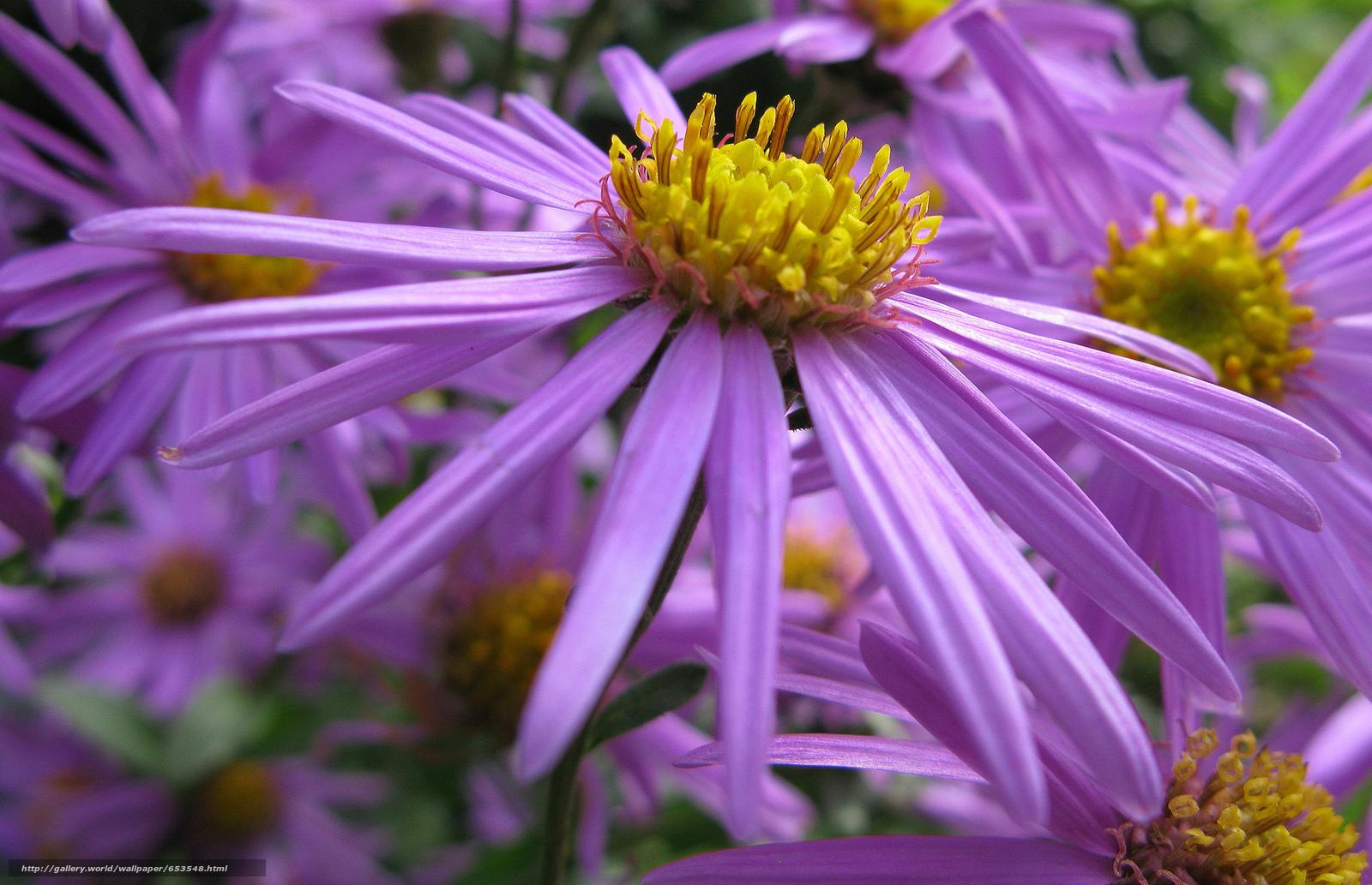 Descargar gratis Flores,  flor,  Macro,  hermosa flor Fondos de escritorio en la resolucin 2048x1322 — imagen №653548