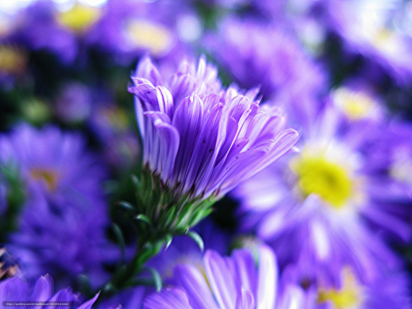 Descargar gratis Flores,  flor,  Macro,  hermosa flor Fondos de escritorio en la resolucin 2048x1536 — imagen №653553