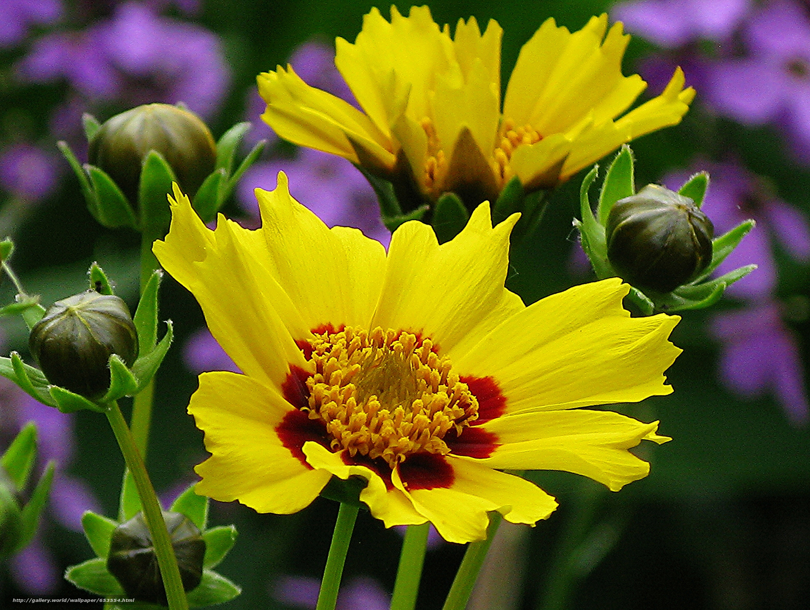 Descargar gratis Flores,  flor,  Macro,  hermosa flor Fondos de escritorio en la resolucin 2048x1544 — imagen №653554