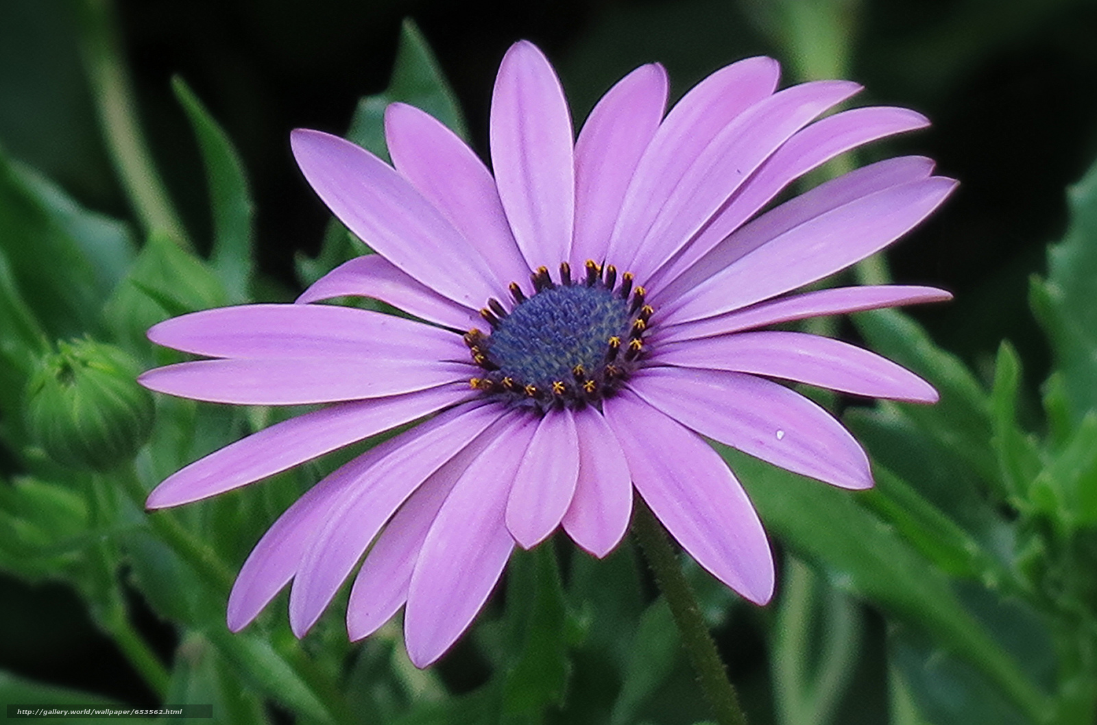 Descargar gratis Flores,  flor,  Macro,  hermosa flor Fondos de escritorio en la resolucin 2048x1354 — imagen №653562