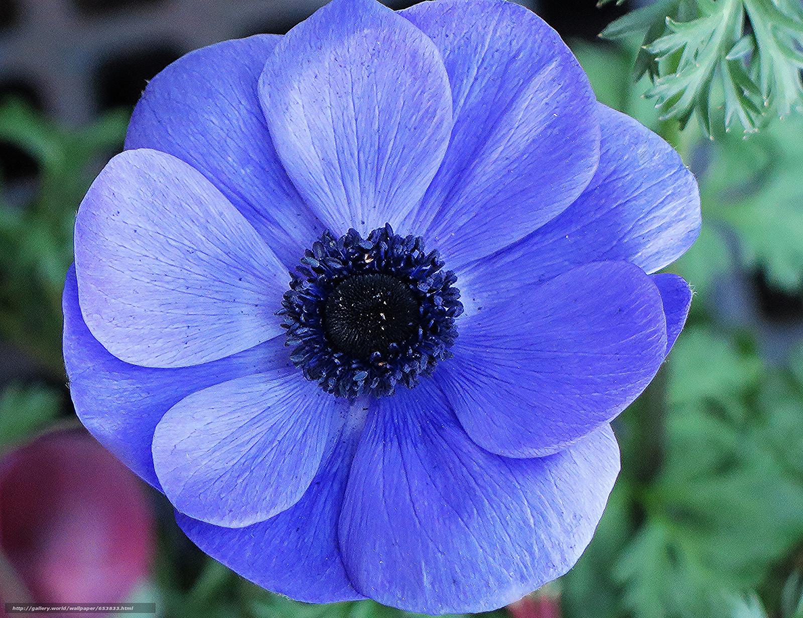 Descargar gratis Flores,  flor,  Macro,  hermosa flor Fondos de escritorio en la resolucin 2048x1574 — imagen №653833