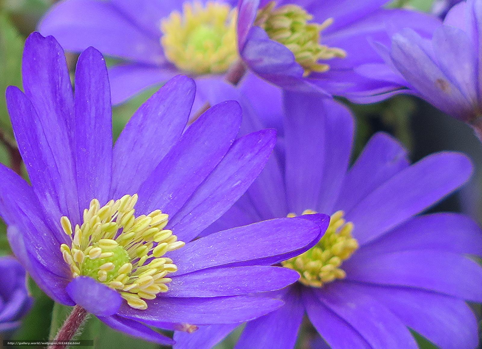 Скачать обои цветы,  цветок,  макро,  красивый цветок бесплатно для рабочего стола в разрешении 2048x1482 — картинка №653834
