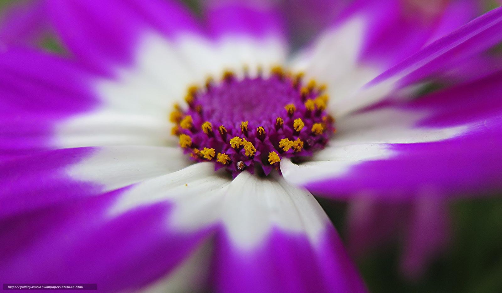 Скачать обои цветы,  цветок,  макро,  красивый цветок бесплатно для рабочего стола в разрешении 2048x1196 — картинка №653836