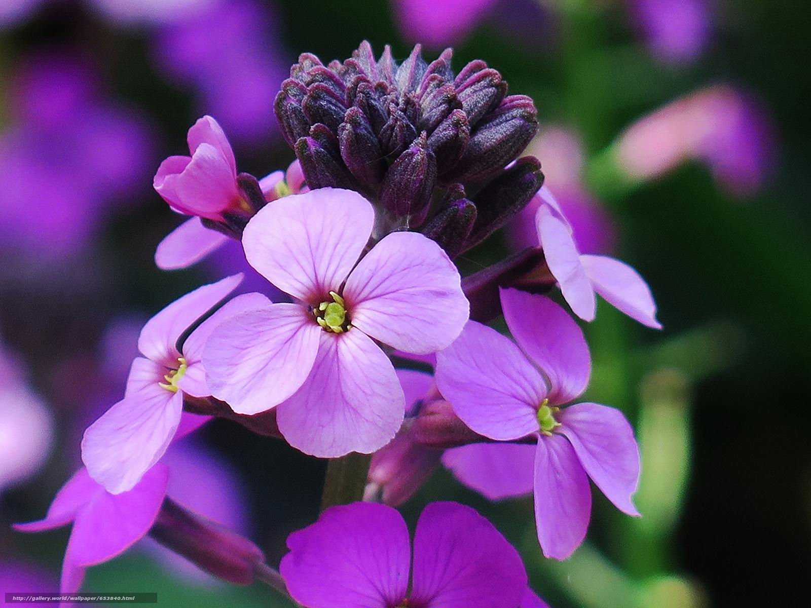 Скачать обои цветы,  цветок,  макро,  красивый цветок бесплатно для рабочего стола в разрешении 2048x1536 — картинка №653840