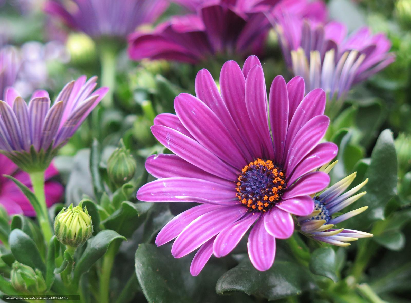 Descargar gratis Flores,  flor,  Macro,  hermosa flor Fondos de escritorio en la resolucin 2048x1510 — imagen №653843