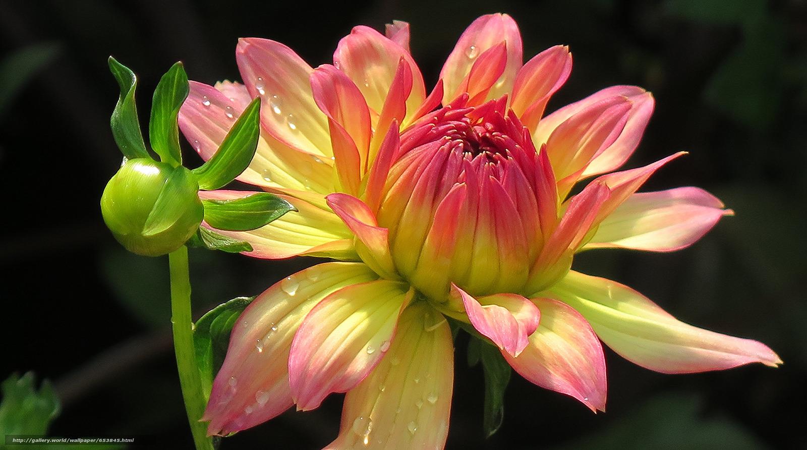 scaricare gli sfondi Fiori,  fiore,  Macro,  bellissimo fiore Sfondi gratis per la risoluzione del desktop 2048x1142 — immagine №653845