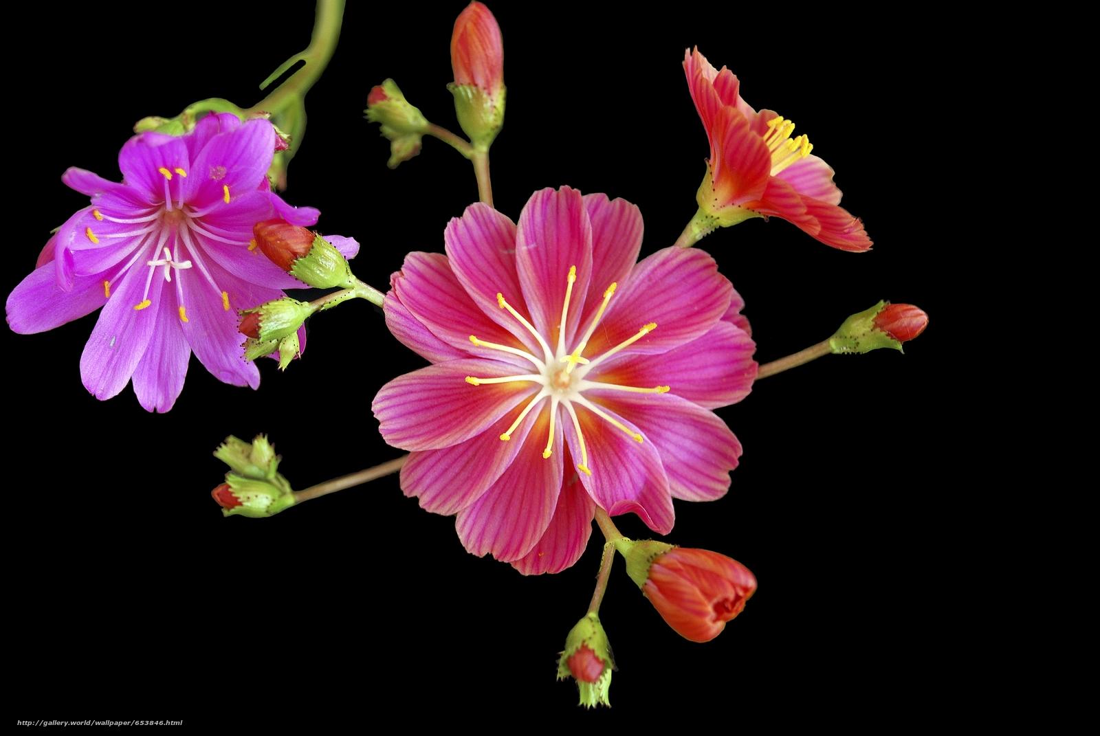 Descargar gratis Flores,  flor,  Macro,  hermosa flor Fondos de escritorio en la resolucin 3872x2592 — imagen №653846