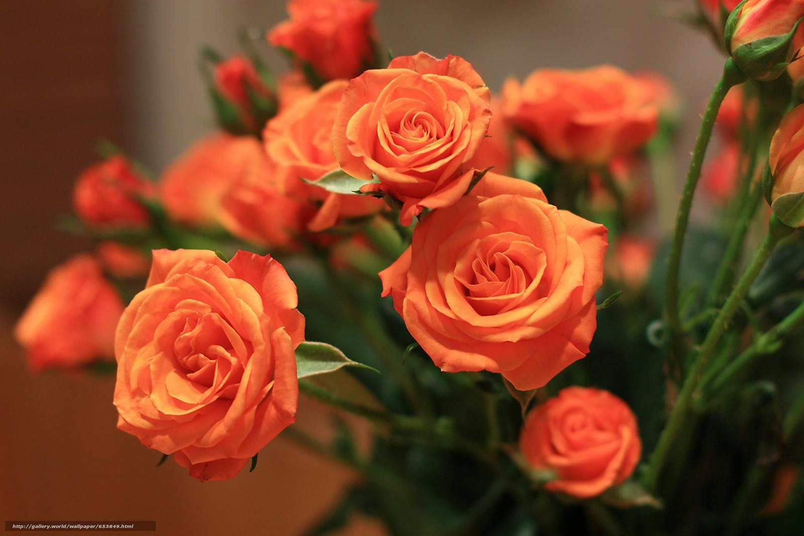 Download wallpaper Roses,  Flowers,  flower,  Macro free desktop wallpaper in the resolution 4122x2748 — picture №653849