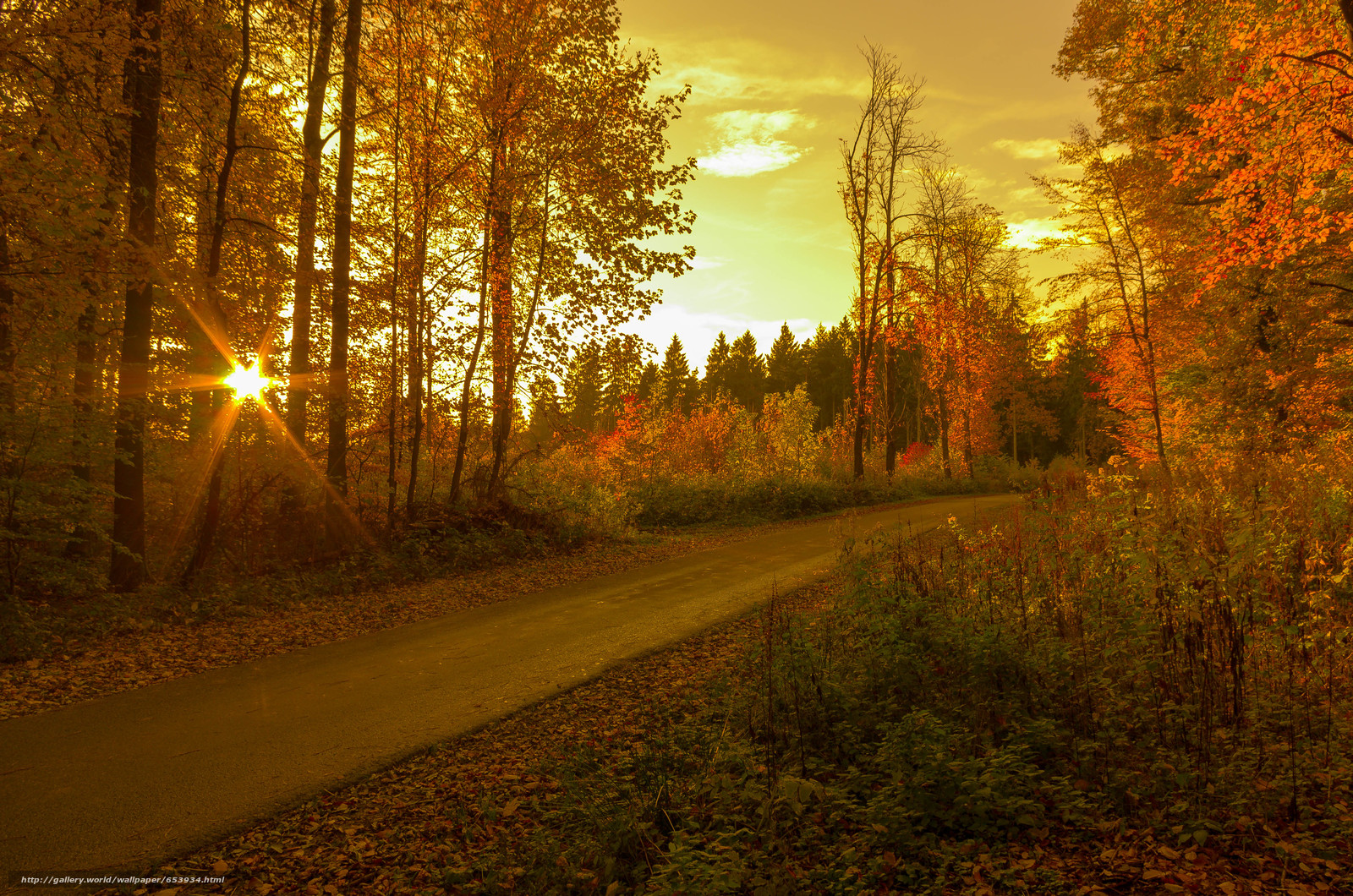Download wallpaper sunset,  autumn,  road,  trees free desktop wallpaper in the resolution 4928x3264 — picture №653934