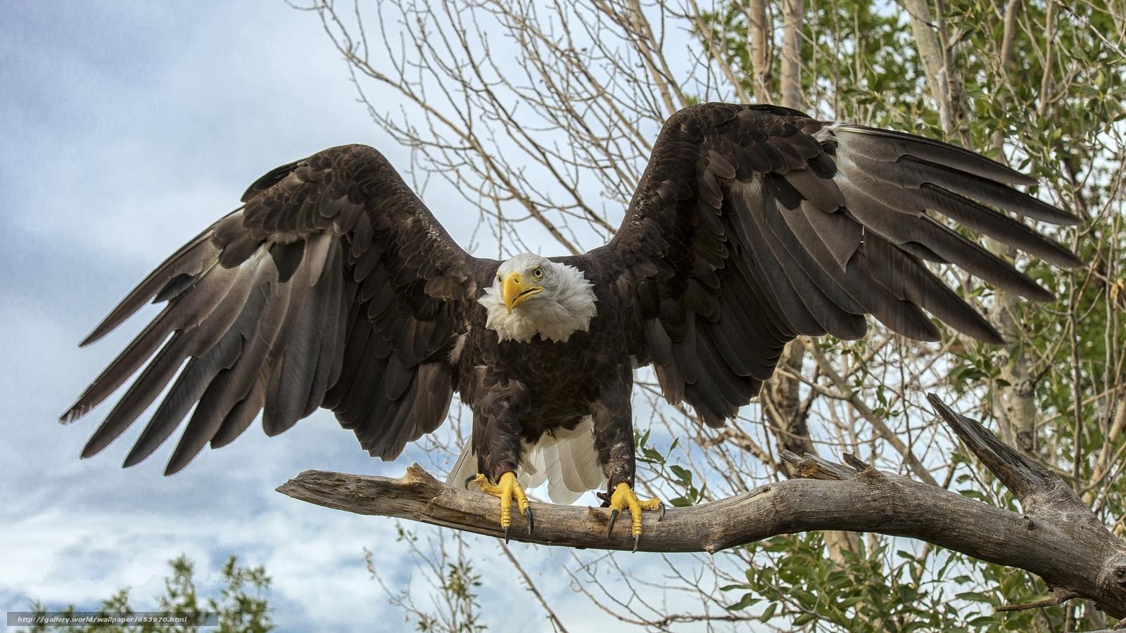 Скачать обои орёл,  птица,  хищник бесплатно для рабочего стола в разрешении 4895x2753 — картинка №653970