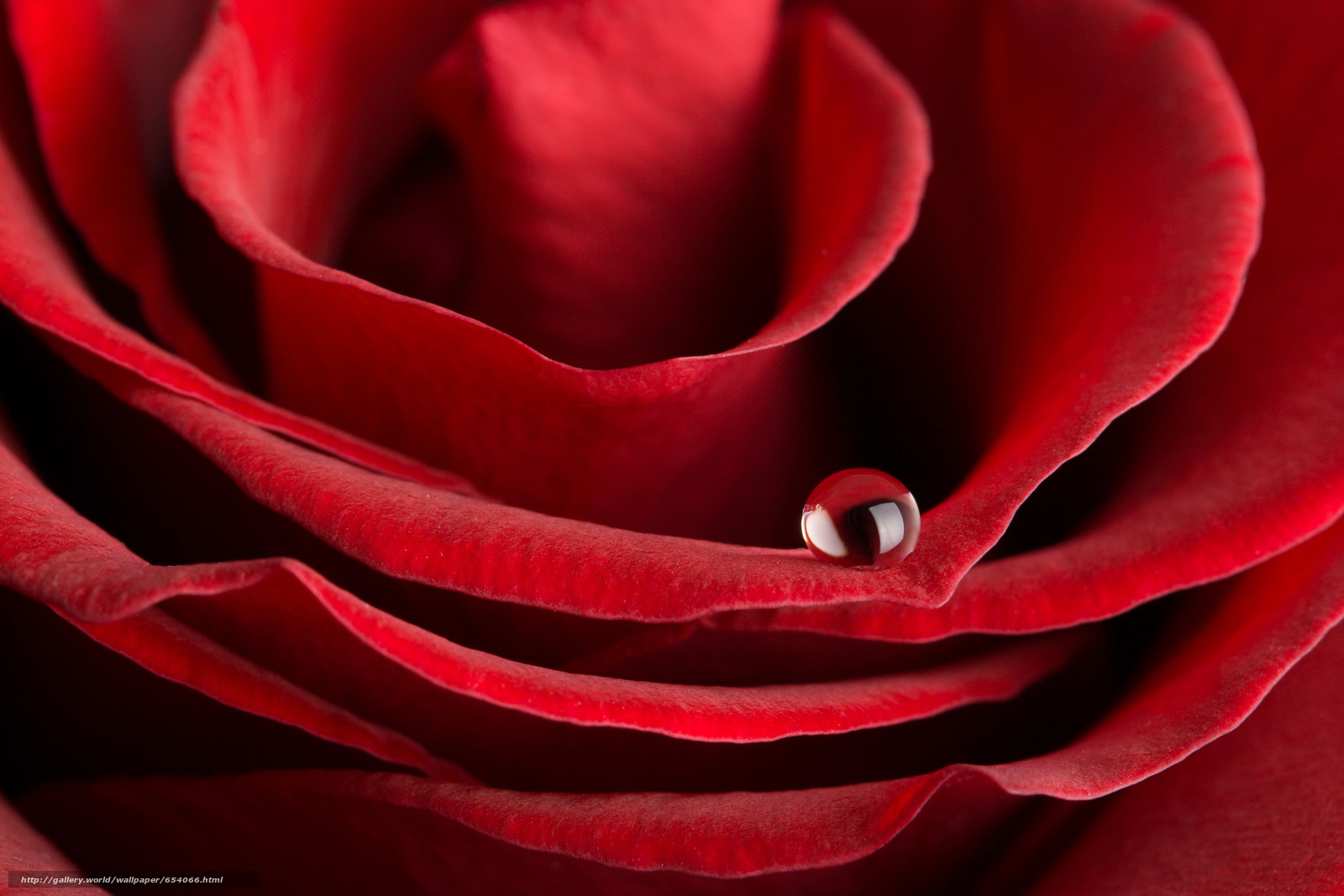 Download wallpaper rose,  Roses,  flower,  Flowers free desktop wallpaper in the resolution 7008x4672 — picture №654066